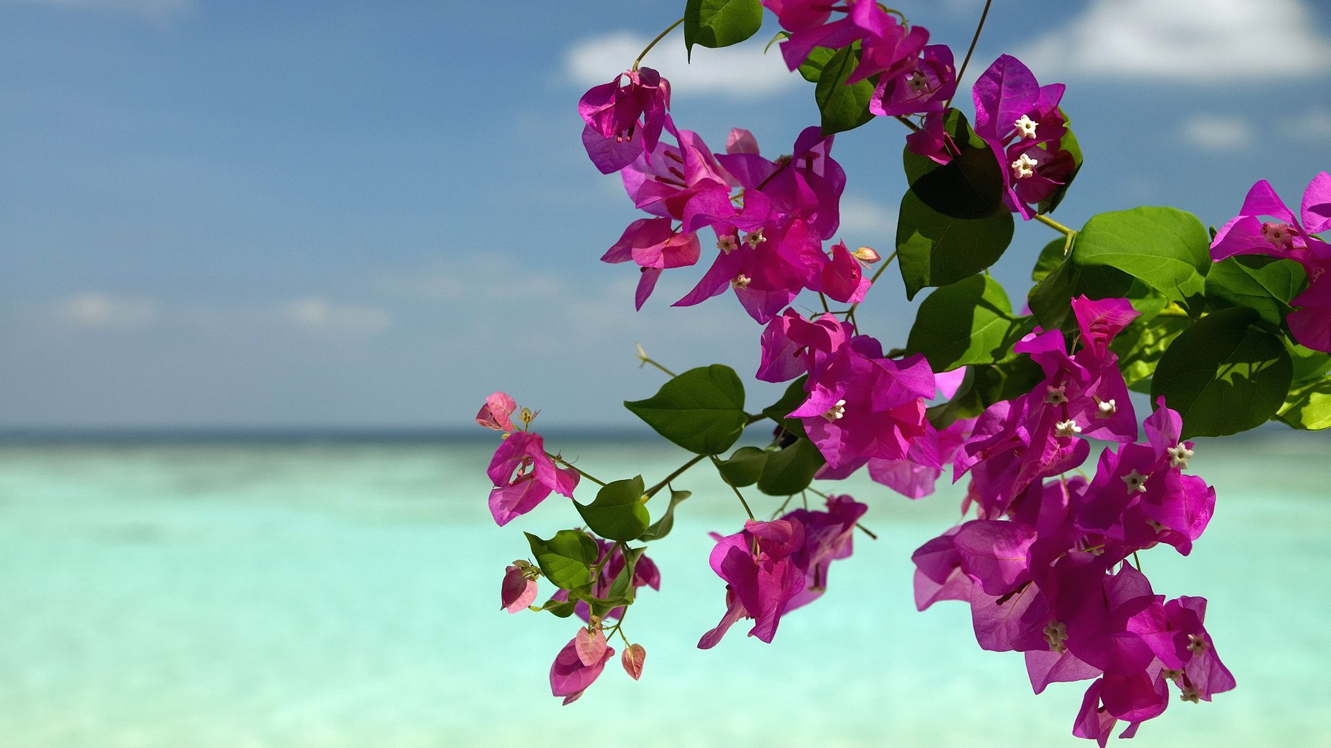 27686 download wallpaper Plants, Landscape, Flowers, Sea screensavers and pictures for free