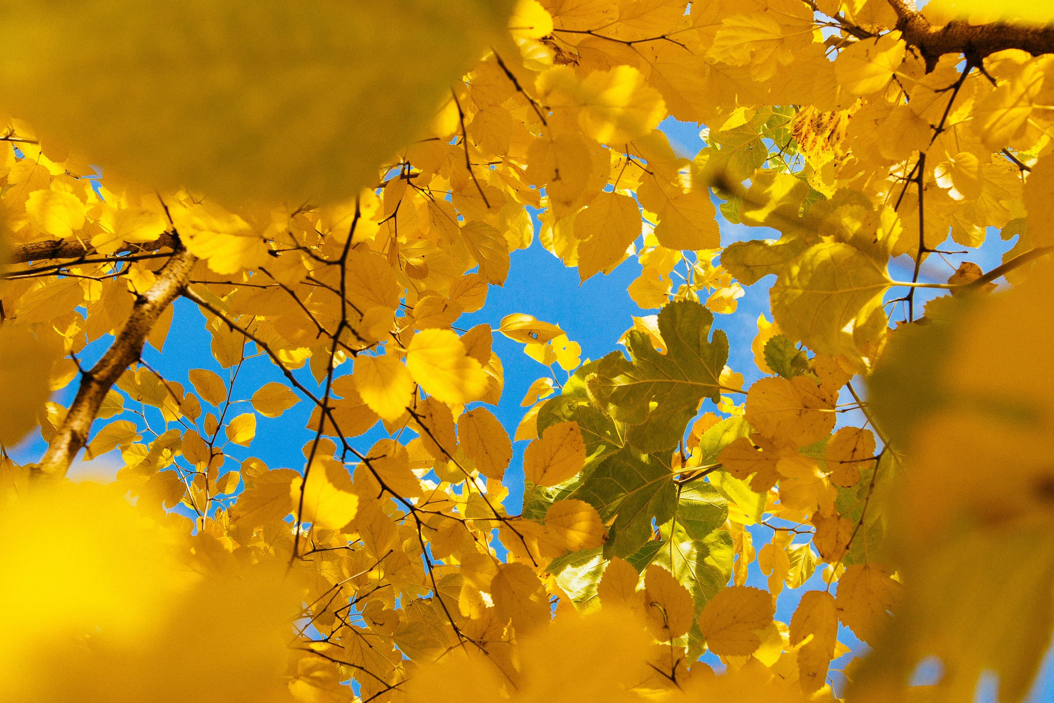 150745 Заставки и Обои Осень на телефон. Скачать Осень, Природа, Листья, Ветки, Желтый картинки бесплатно