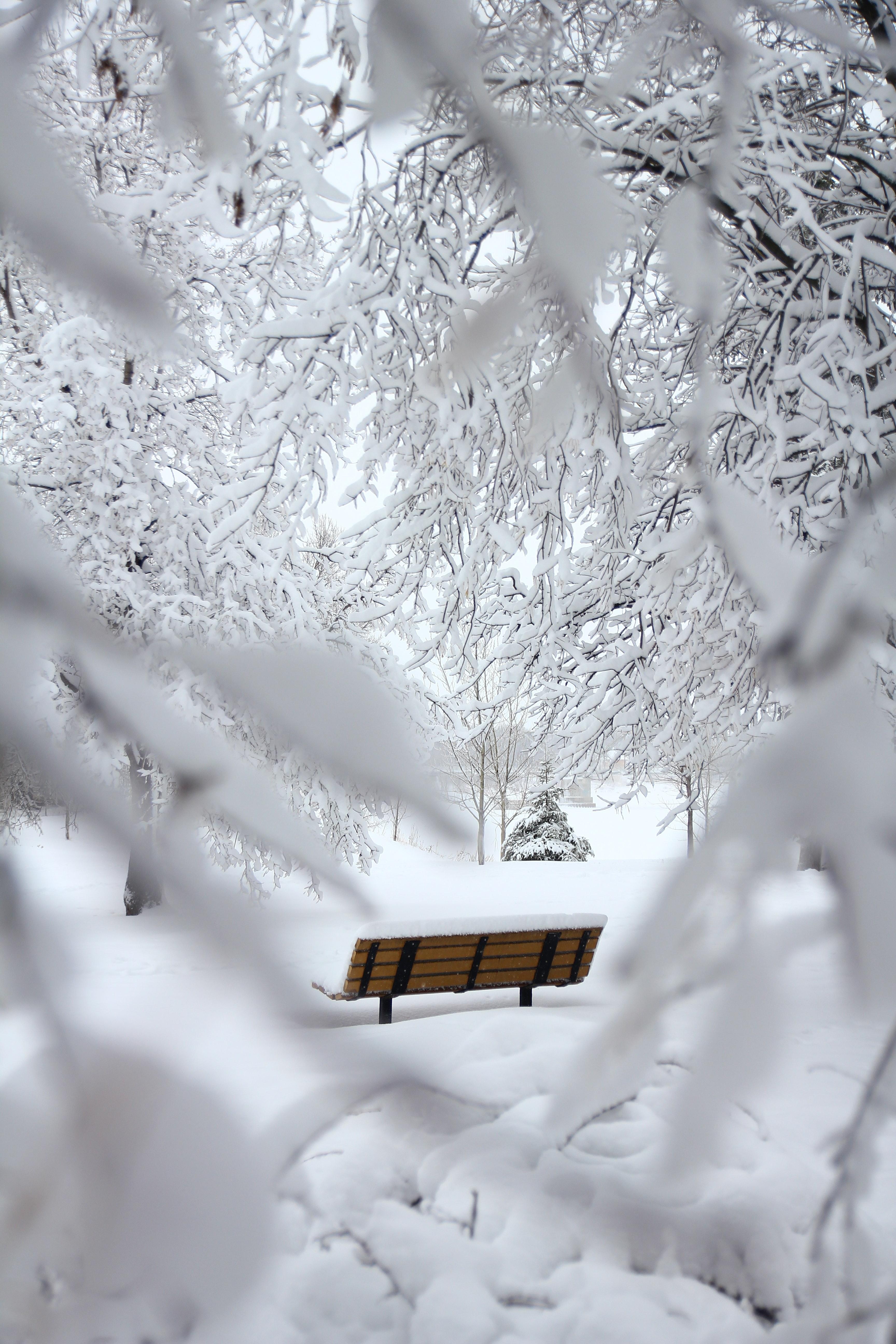 63072 скачать обои Зима, Ветки, Природа, Снег, Минимализм, Скамейка - заставки и картинки бесплатно