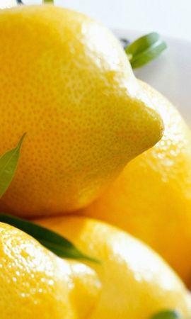 1121 télécharger le fond d'écran Fruits, Nourriture, Citrons - économiseurs d'écran et images gratuitement
