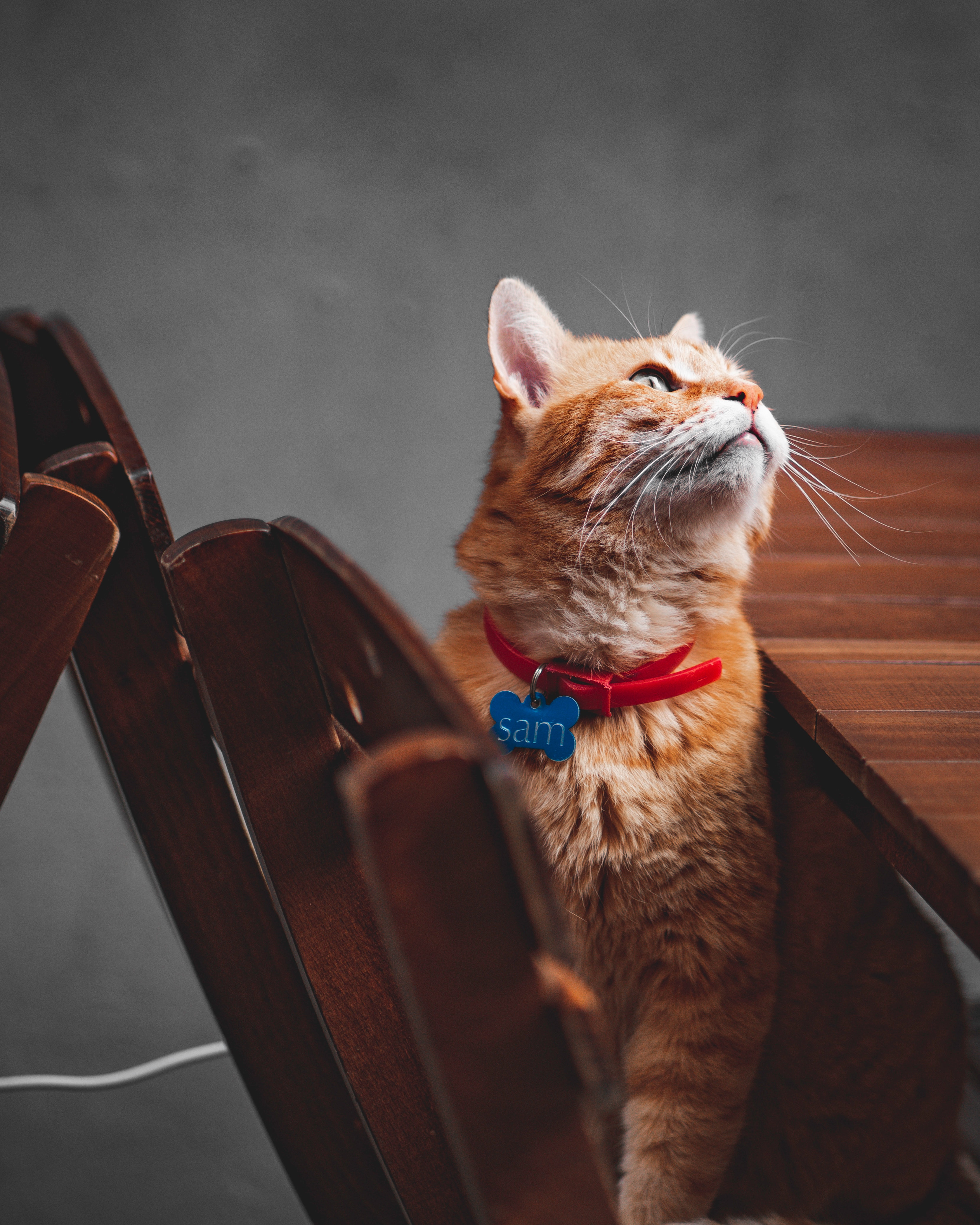 70797 download wallpaper Animals, Cat, Redhead, Sight, Opinion, Pet, Collar screensavers and pictures for free