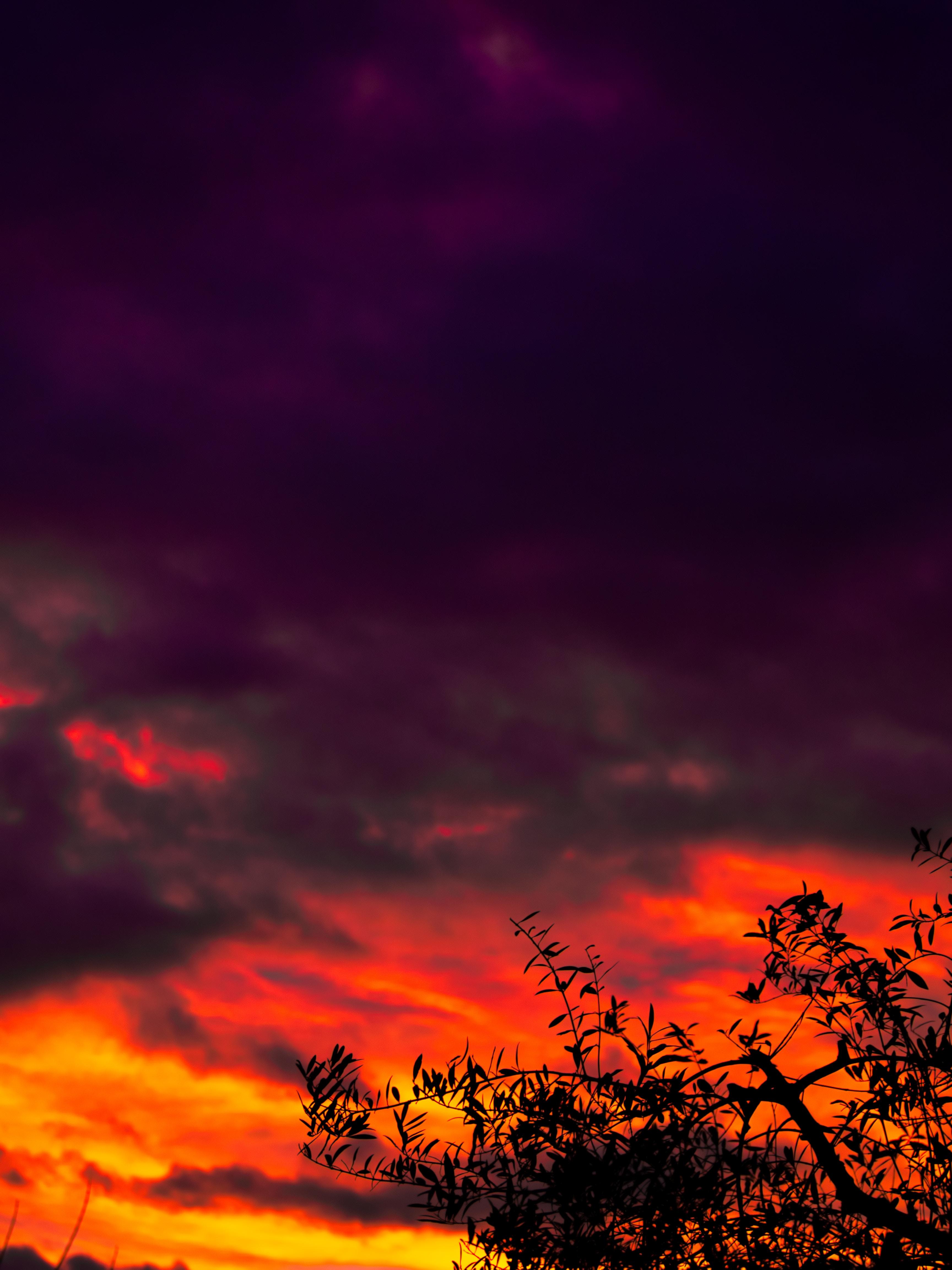 88123 скачать обои Темные, Дерево, Закат, Облака, Темный - заставки и картинки бесплатно