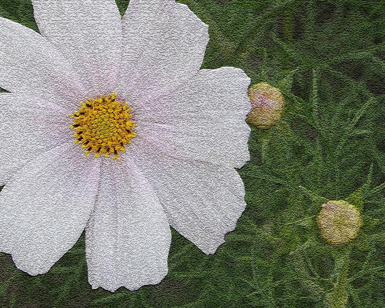 2585 скачать обои Растения, Цветы, Ромашки - заставки и картинки бесплатно