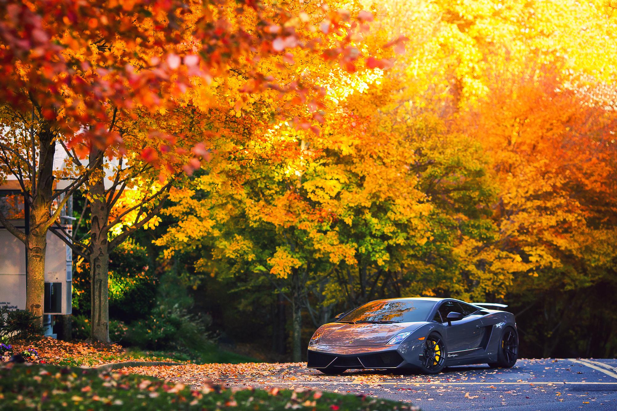 144492 Hintergrundbild herunterladen Herbst, Lamborghini, Cars, Gallardo, Superleggera, Lp570 - Bildschirmschoner und Bilder kostenlos