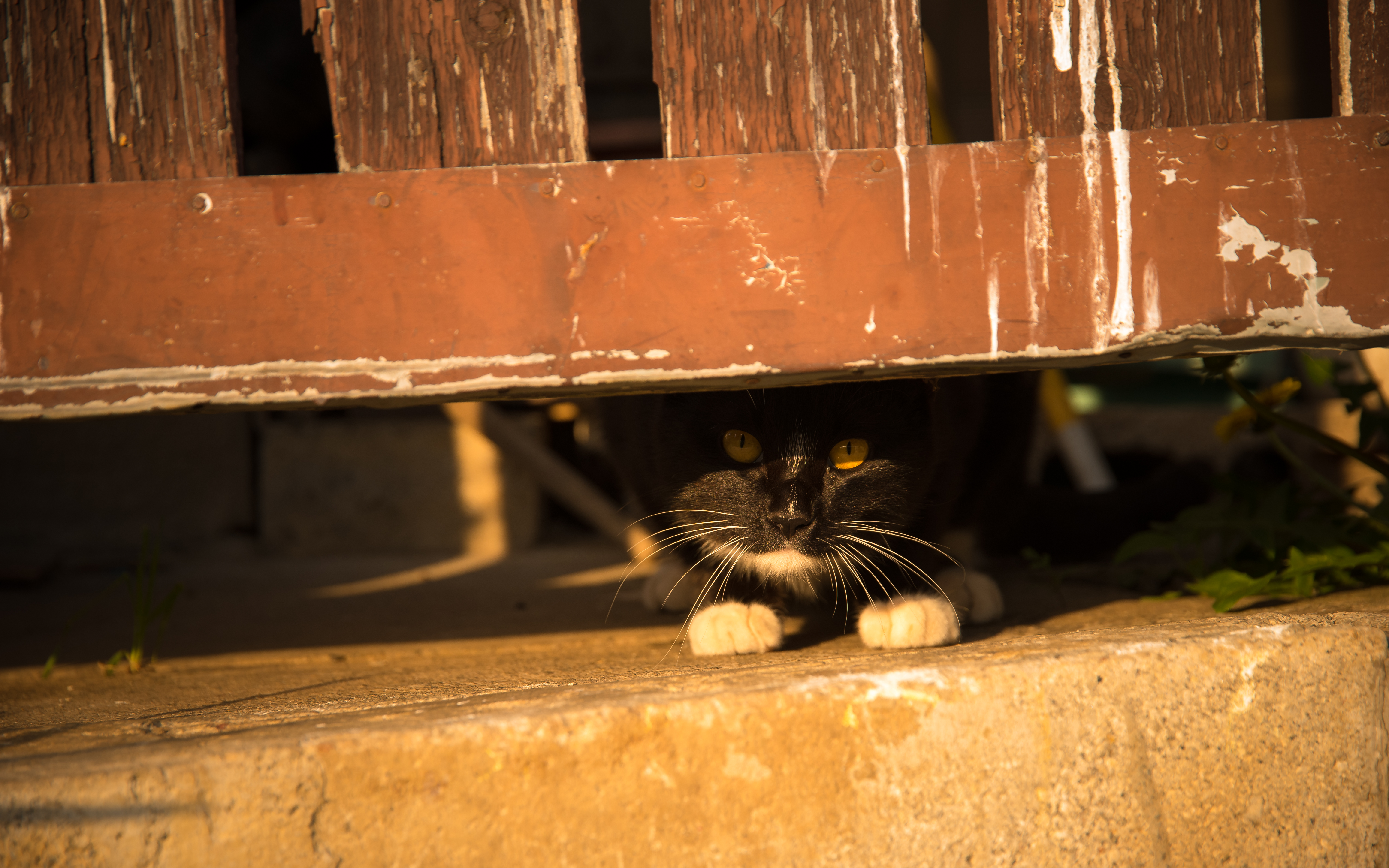 134851 download wallpaper Animals, Cat, Fence, Peek Out, Look Out, Hide, Pet screensavers and pictures for free