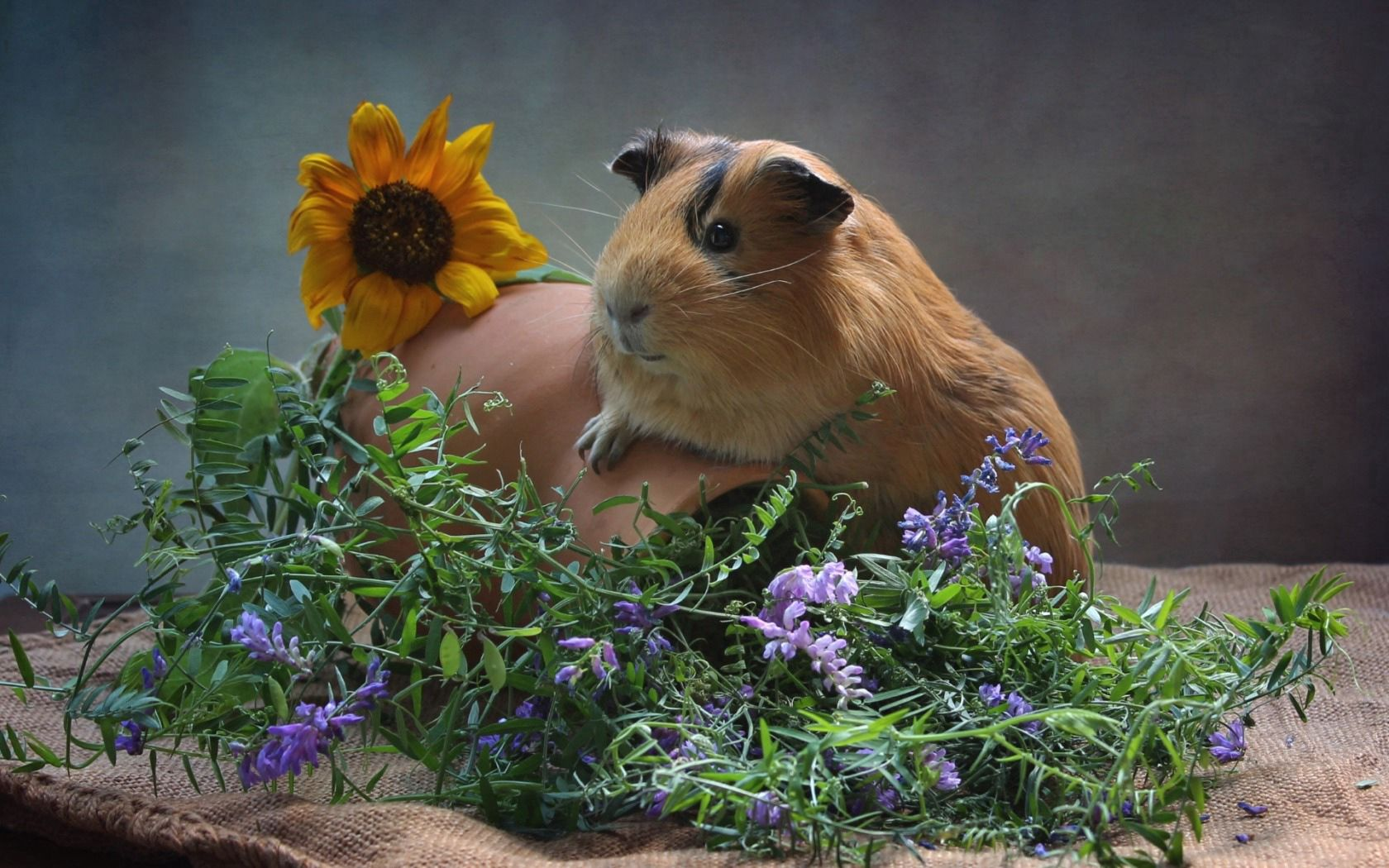 137067 download wallpaper Animals, Guinea Pig, Jug, Rodent, Flowers screensavers and pictures for free