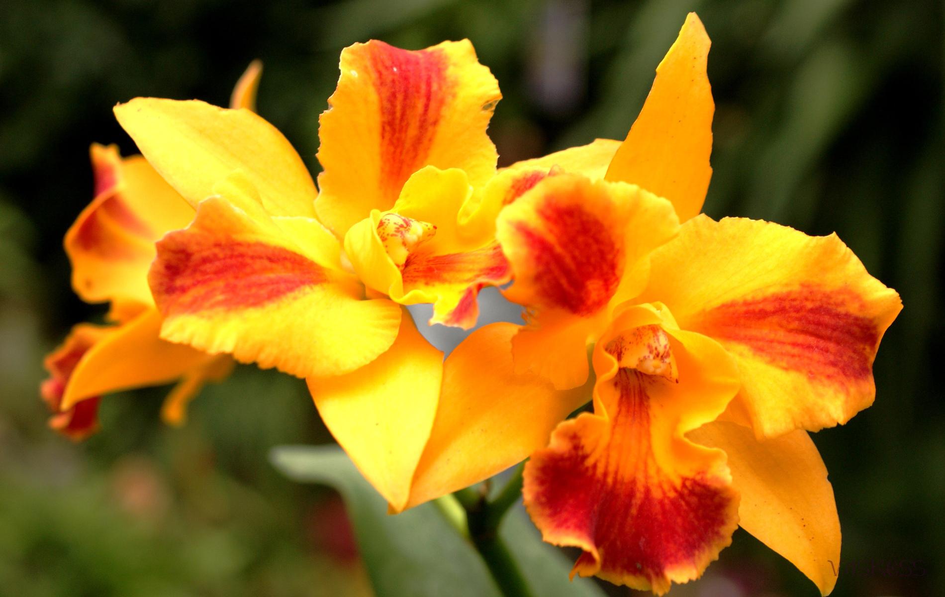 3425 скачать обои Растения, Цветы - заставки и картинки бесплатно