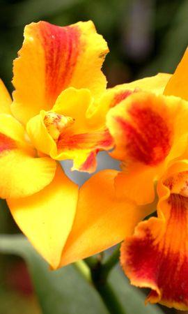 3425 descargar fondo de pantalla Plantas, Flores: protectores de pantalla e imágenes gratis