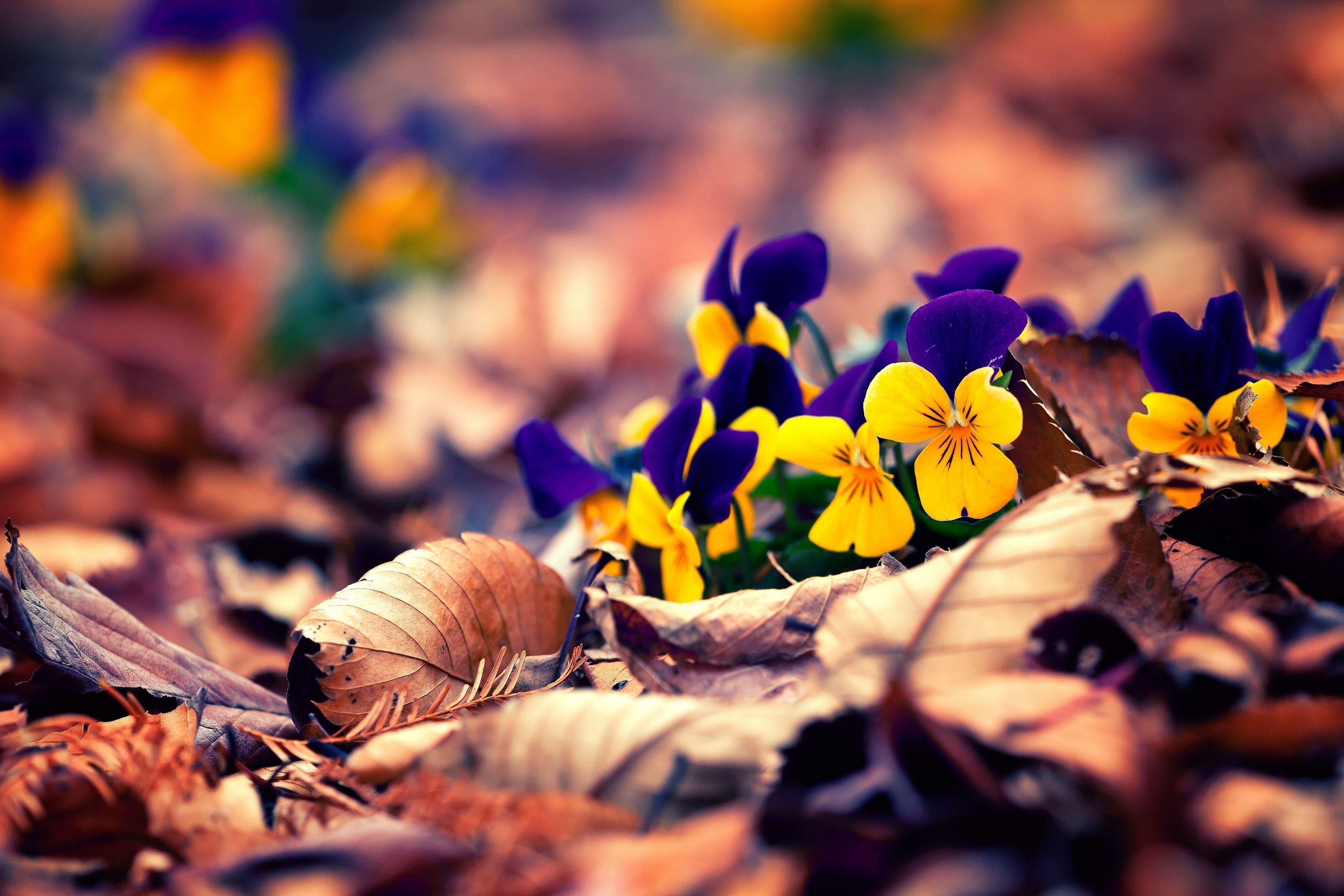 17818 скачать обои Растения, Цветы - заставки и картинки бесплатно