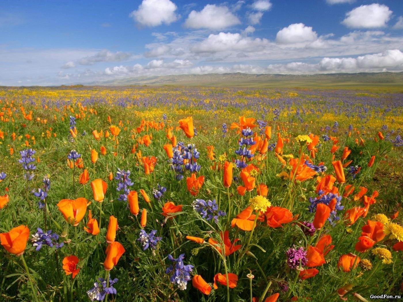 25933 скачать обои Растения, Пейзаж, Цветы, Поля, Небо, Облака - заставки и картинки бесплатно