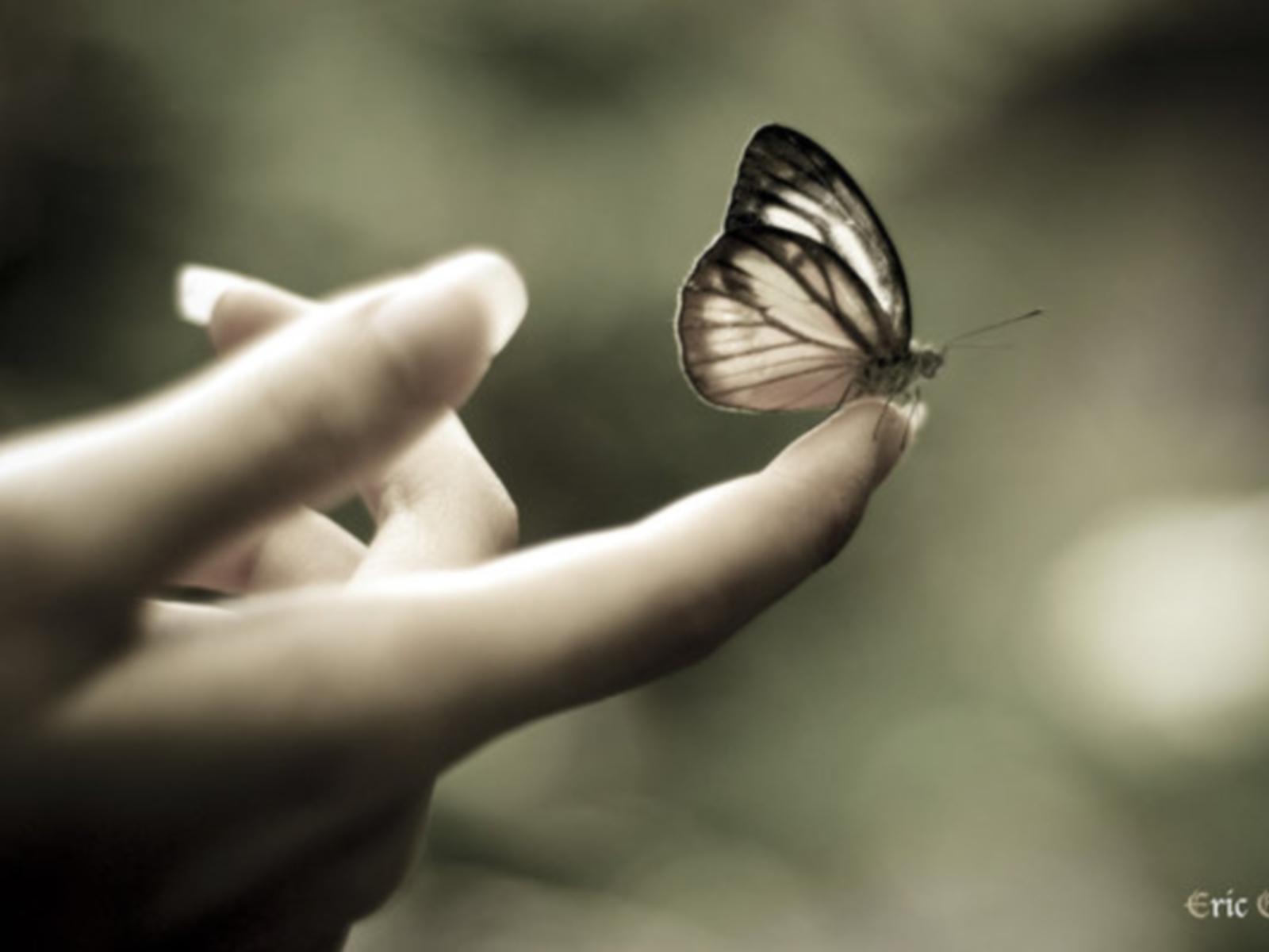 10630 скачать обои Бабочки, Насекомые, Артфото - заставки и картинки бесплатно