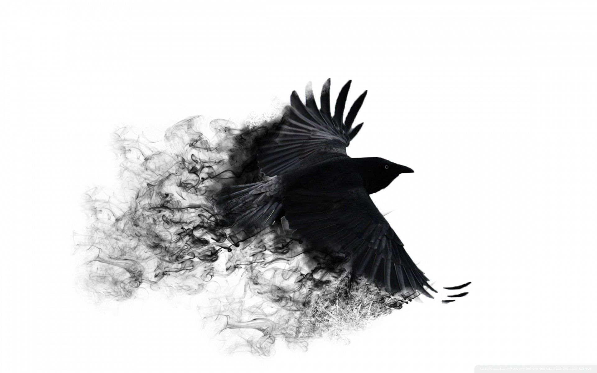 111166 download wallpaper Abstract, Crow, Wings, Bird, Sweep, Wave screensavers and pictures for free