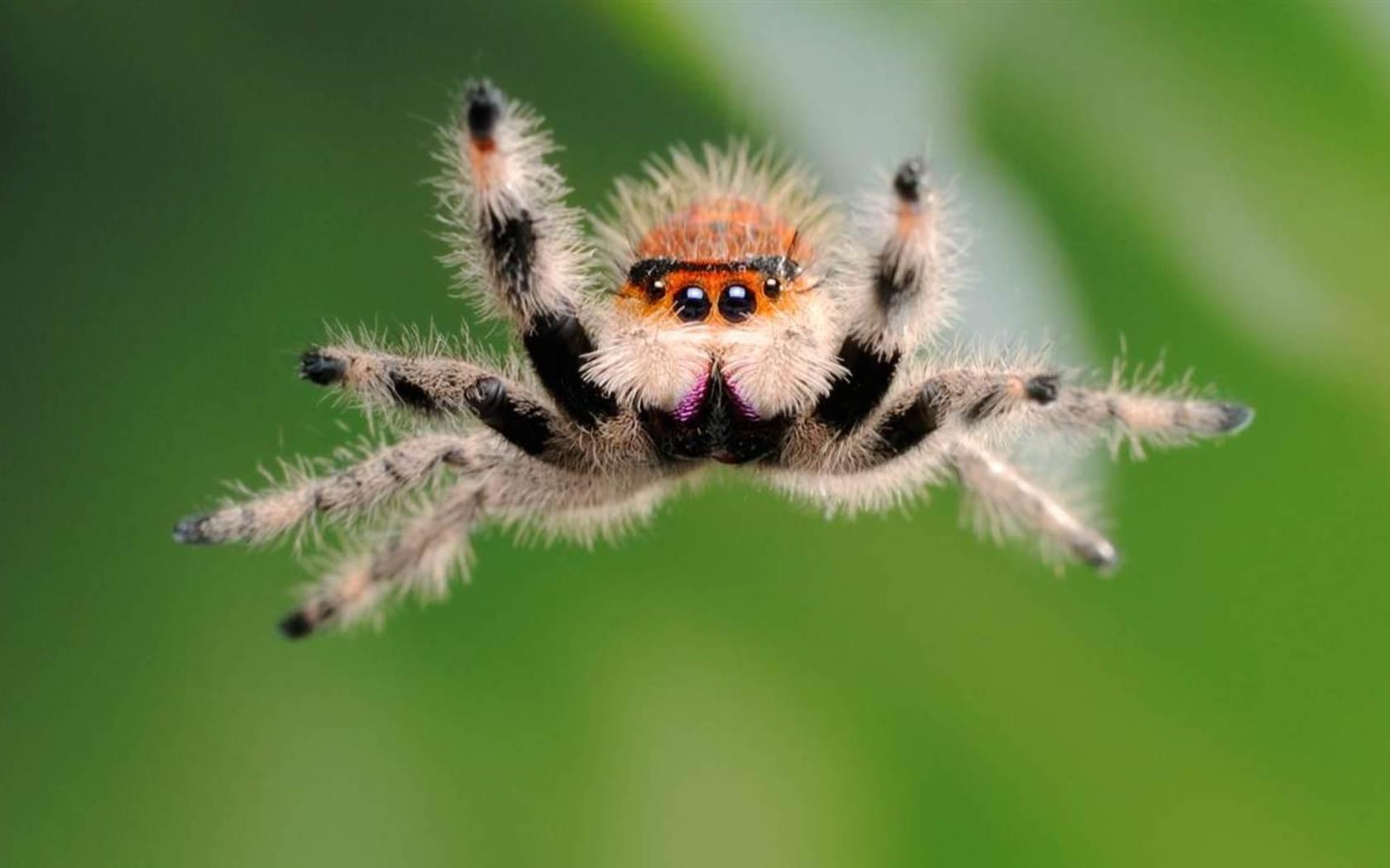 26296 descargar fondo de pantalla Animales, Insectos, Spiders: protectores de pantalla e imágenes gratis