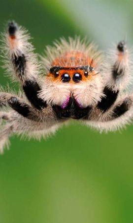 26296 Salvapantallas y fondos de pantalla Insectos en tu teléfono. Descarga imágenes de Animales, Insectos, Spiders gratis
