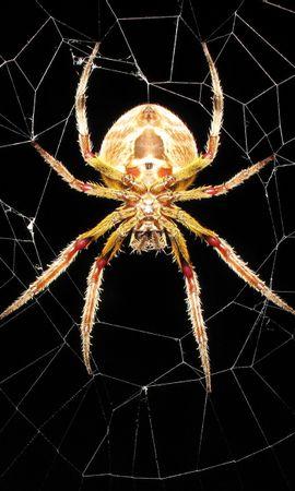 1317 Salvapantallas y fondos de pantalla Insectos en tu teléfono. Descarga imágenes de Insectos, Web, Spiders gratis