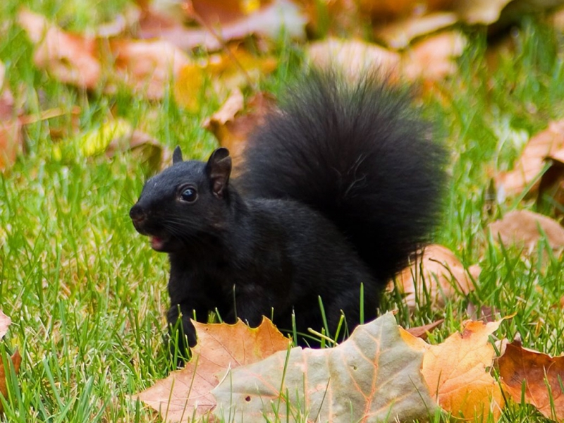 33658 download wallpaper Animals, Squirrel screensavers and pictures for free