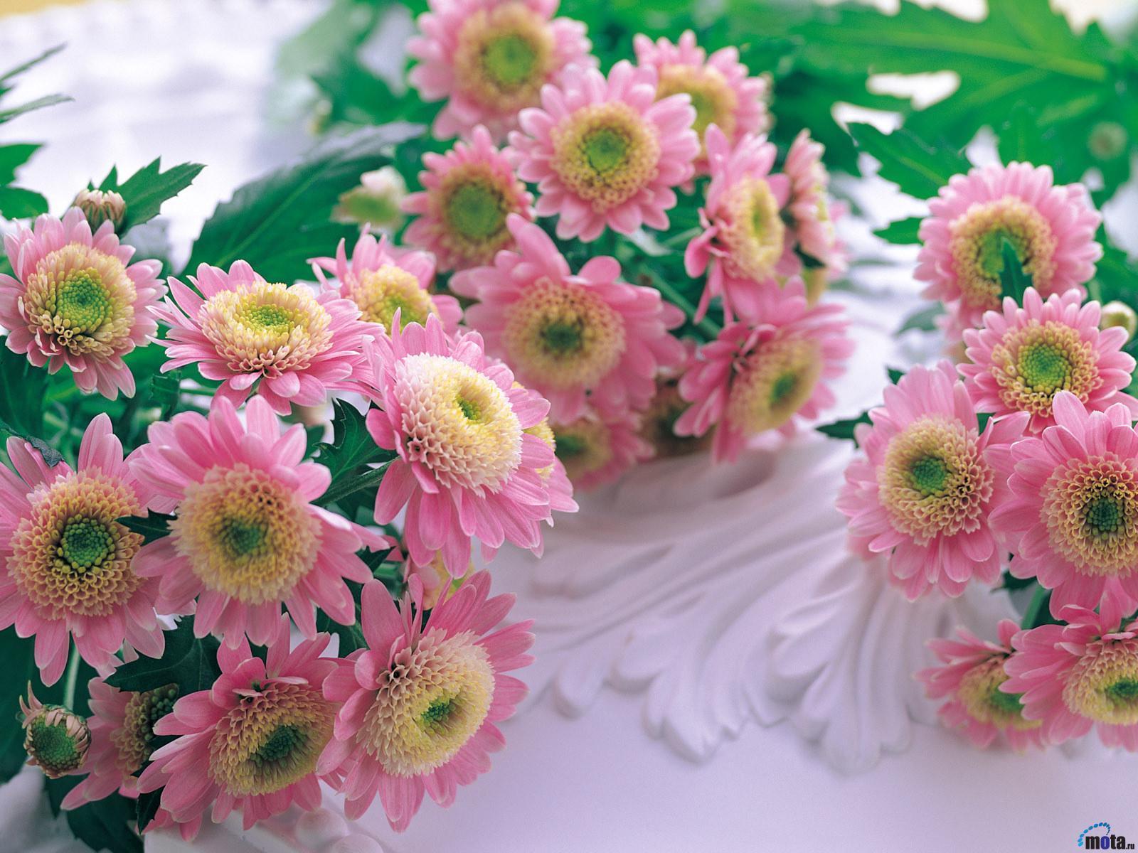 15747 descargar fondo de pantalla Plantas, Flores: protectores de pantalla e imágenes gratis