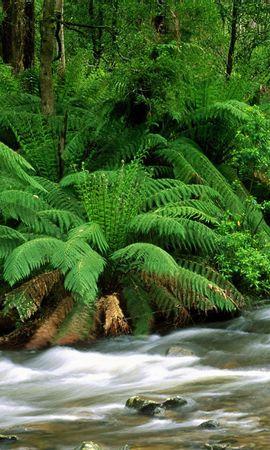 10123 скачать обои Растения, Река, Папоротники - заставки и картинки бесплатно