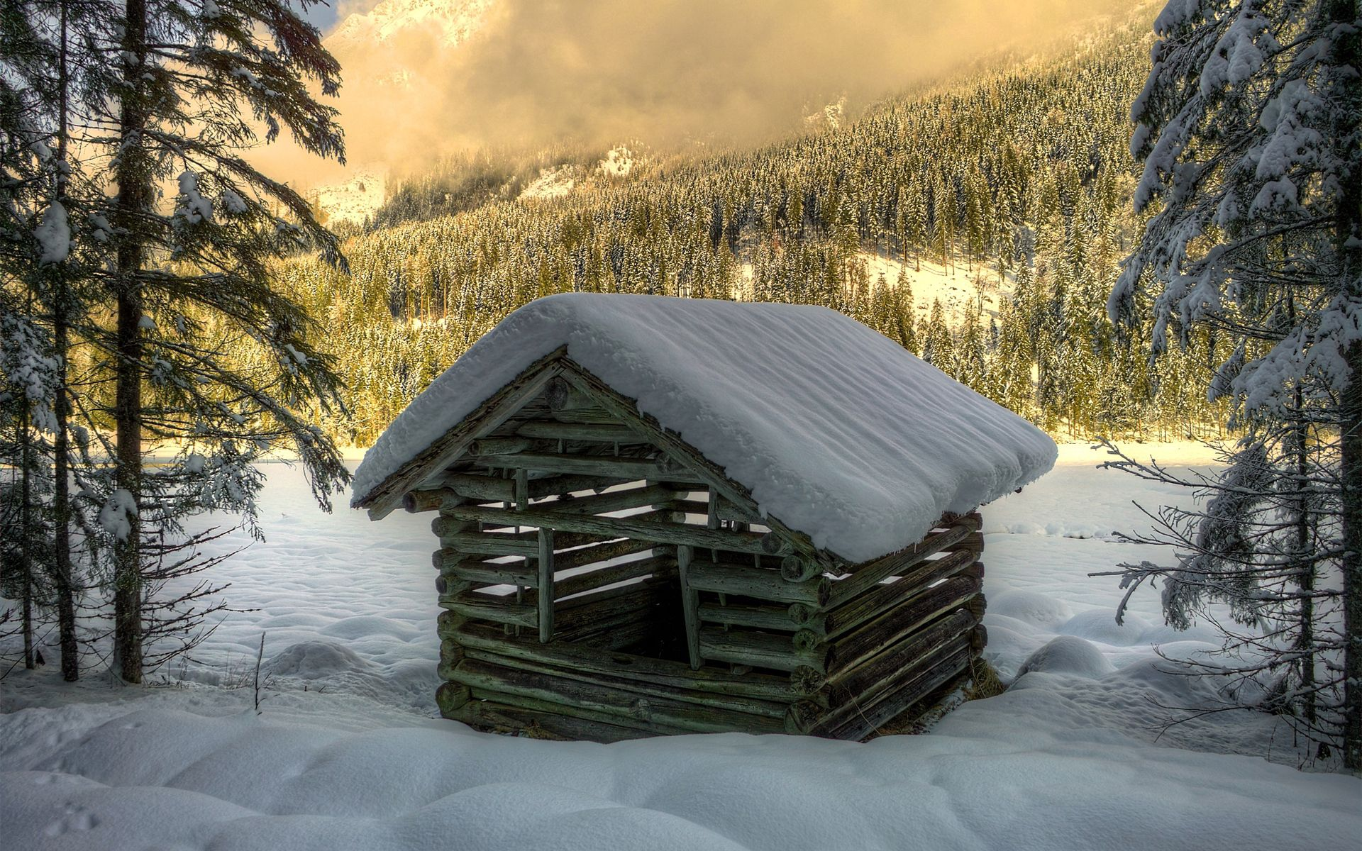 118365 Screensavers and Wallpapers Spruce for phone. Download Winter, Nature, Trees, Snow, Building, Forest, Spruce, Fir, Small House, Lodge, Construction, Logs pictures for free