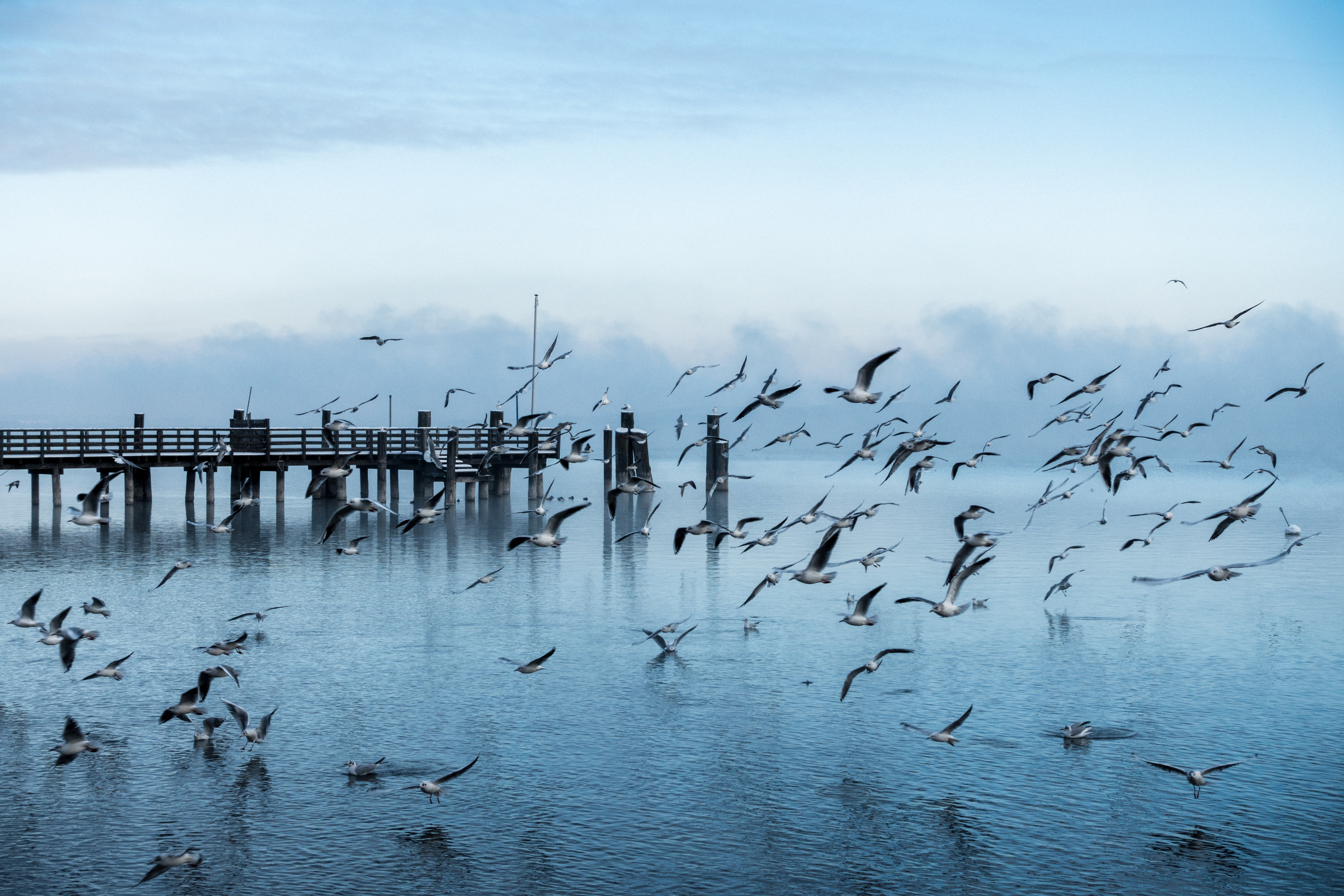 132173 download wallpaper Nature, Pier, Sea, Flight, Seagulls screensavers and pictures for free