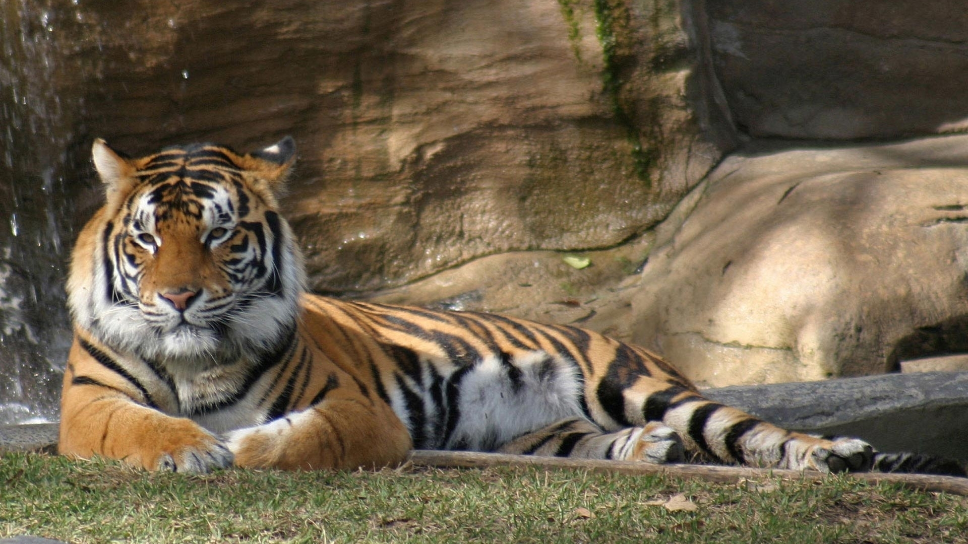 45574 descargar fondo de pantalla Animales, Tigres: protectores de pantalla e imágenes gratis