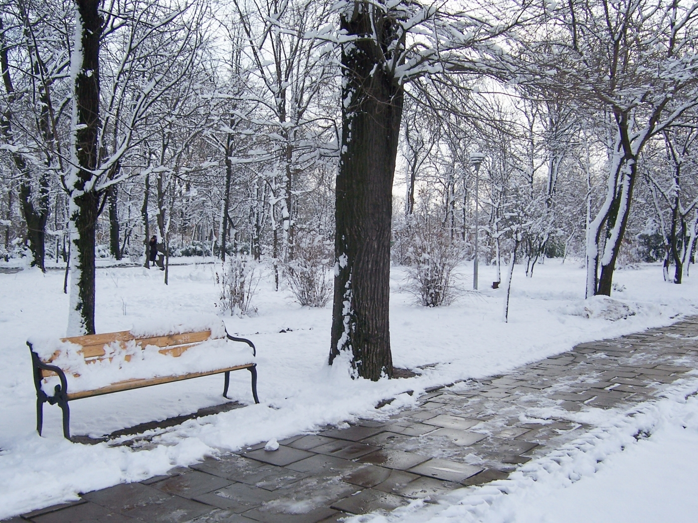 43490 download wallpaper Landscape, Winter, Snow screensavers and pictures for free
