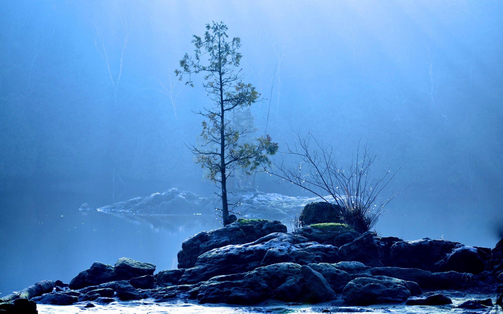 97287 télécharger le fond d'écran Nature, Lac, Bois, Arbre, Brouillard - économiseurs d'écran et images gratuitement