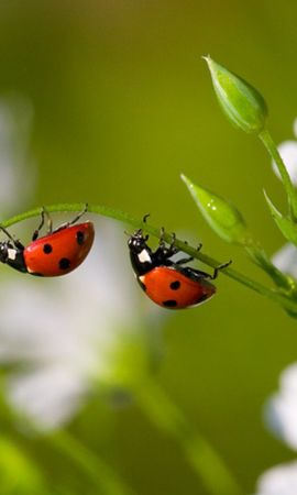 44113 Screensavers and Wallpapers Insects for phone. Download Insects, Ladybugs pictures for free