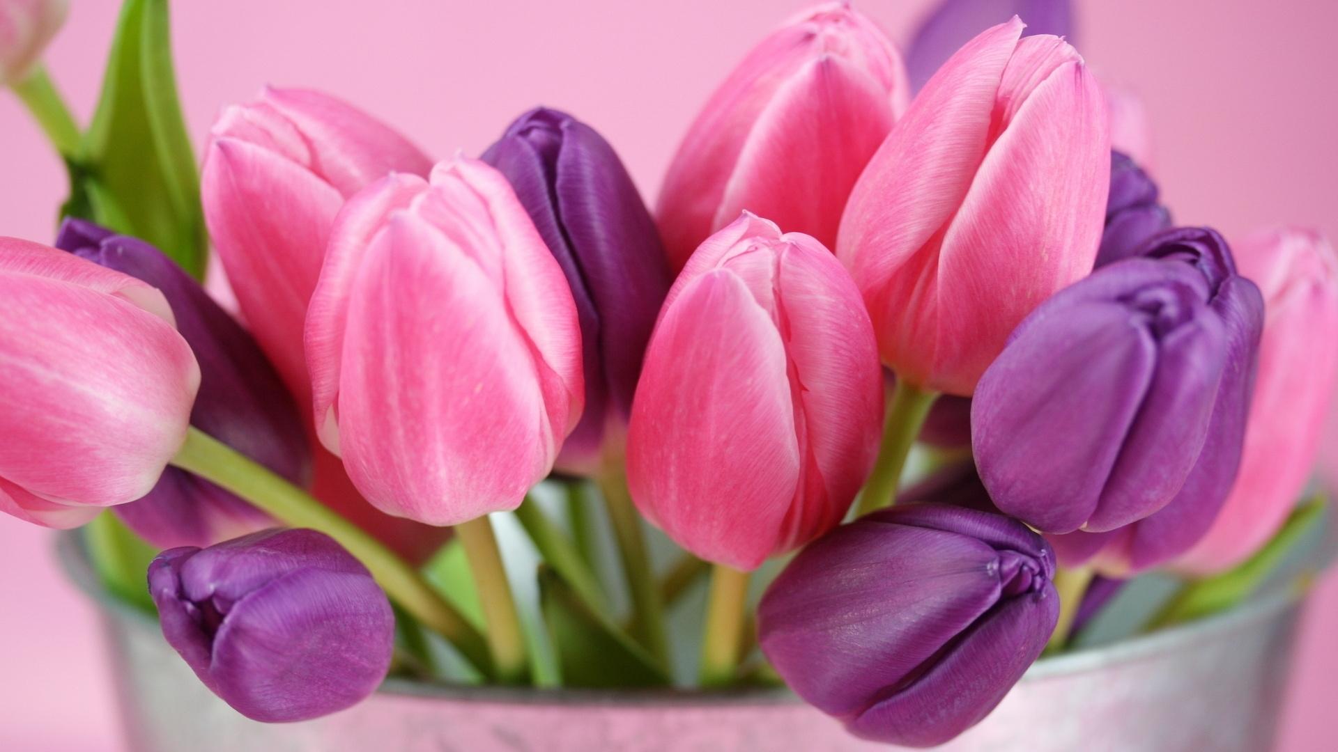 26297 скачать обои Растения, Цветы, Тюльпаны, Букеты - заставки и картинки бесплатно