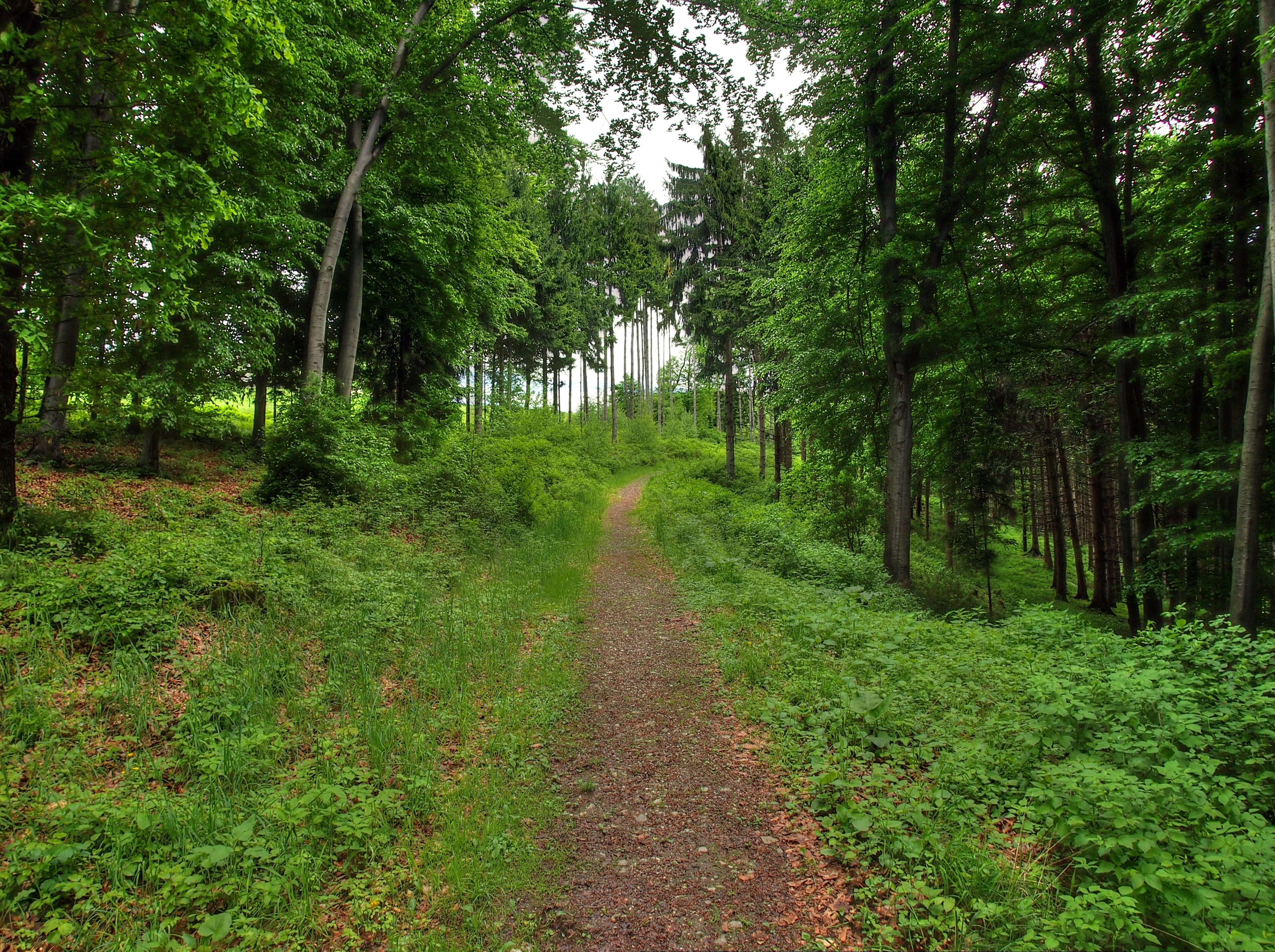 122226 download wallpaper Landscape, Nature, Forest, Path screensavers and pictures for free