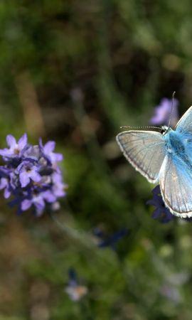 30674 Salvapantallas y fondos de pantalla Insectos en tu teléfono. Descarga imágenes de Mariposas, Insectos gratis