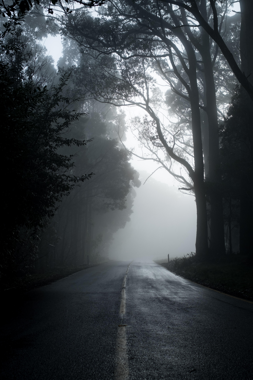 143591 скачать обои Дорога, Туман, Асфальт, Деревья, Природа, Пустота - заставки и картинки бесплатно
