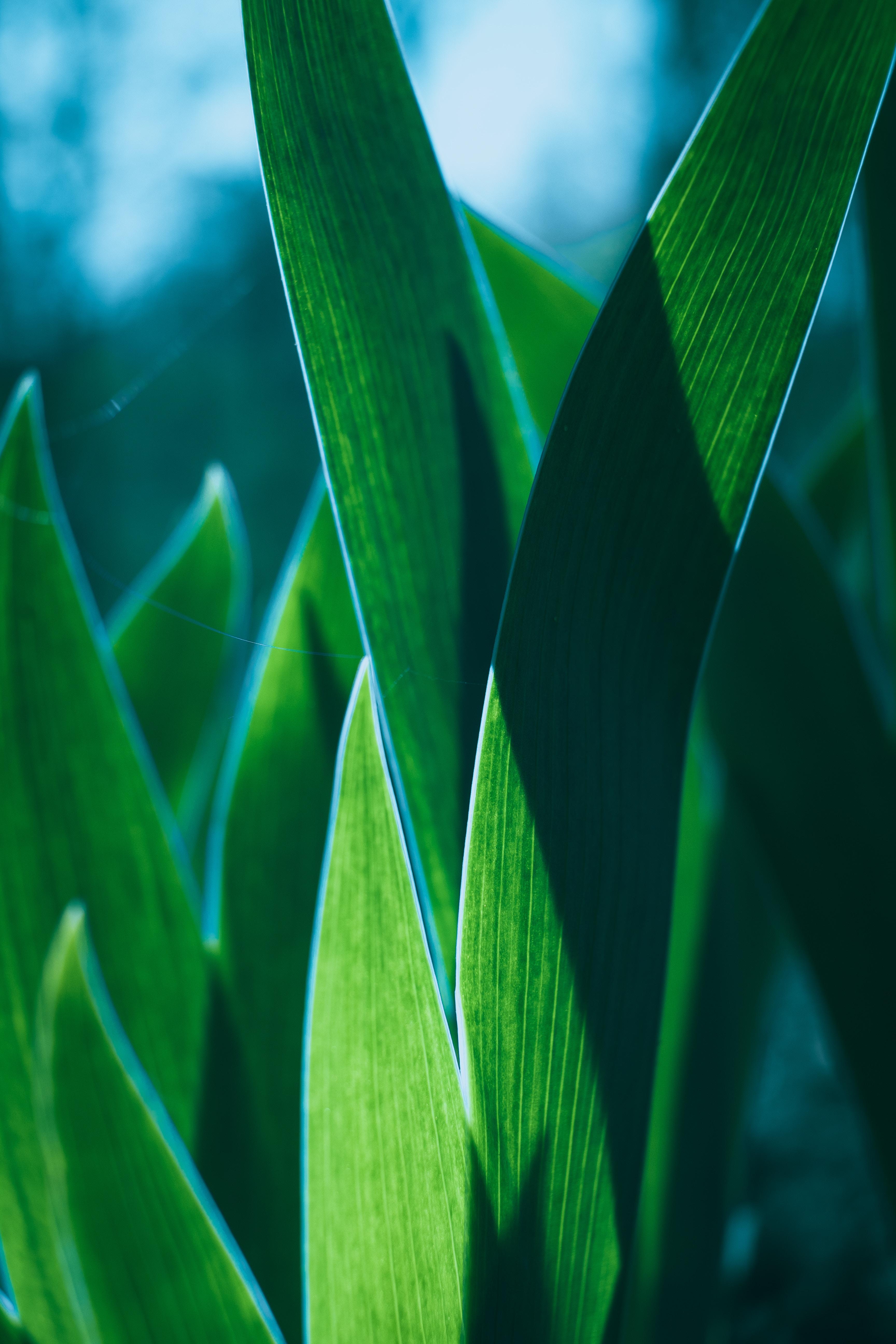 152971 скачать обои Макро, Листья, Растение, Зеленый, Крупный План - заставки и картинки бесплатно