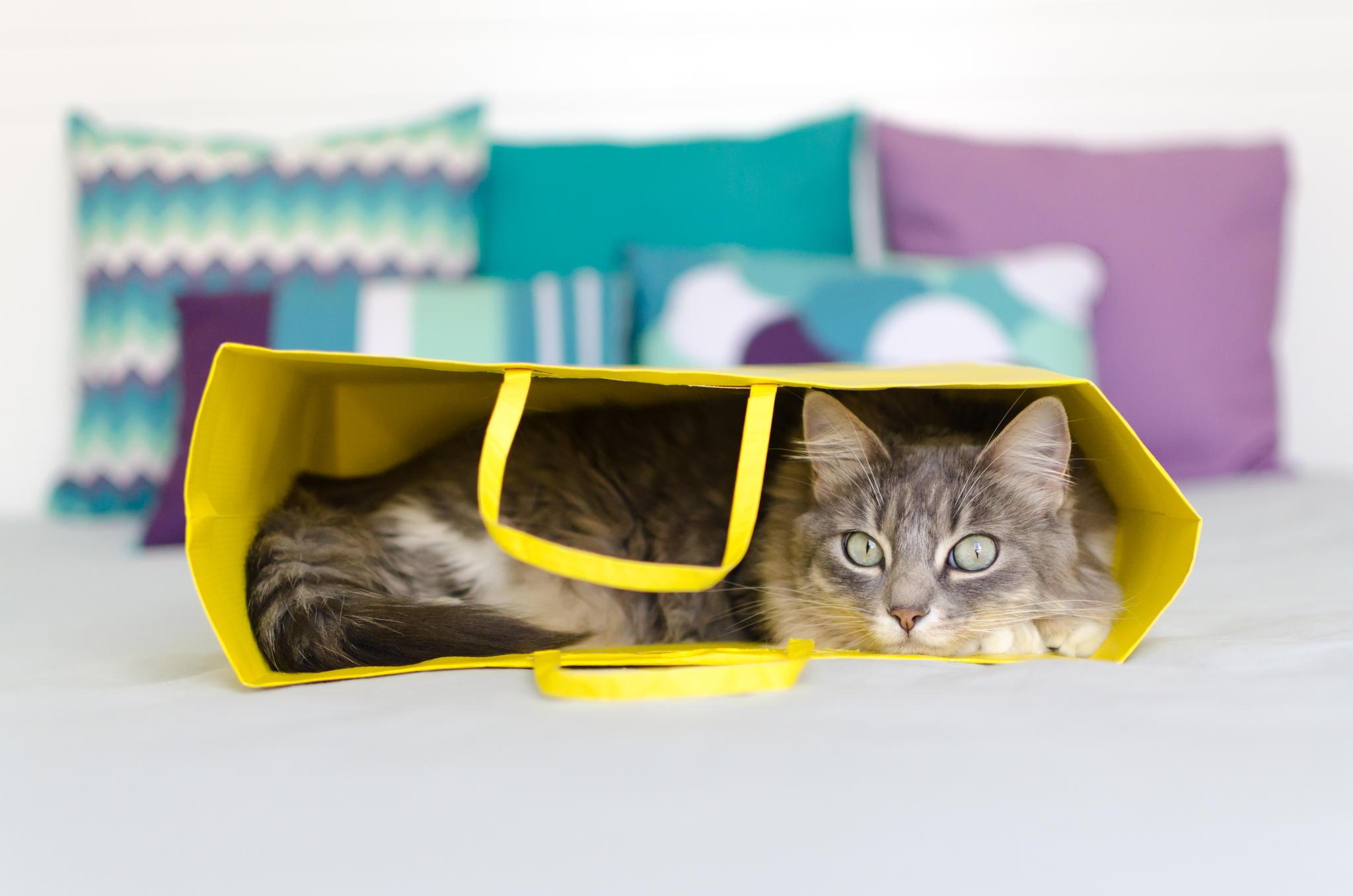53705 скачать обои Животные, Кот, Пакет, Лежать - заставки и картинки бесплатно