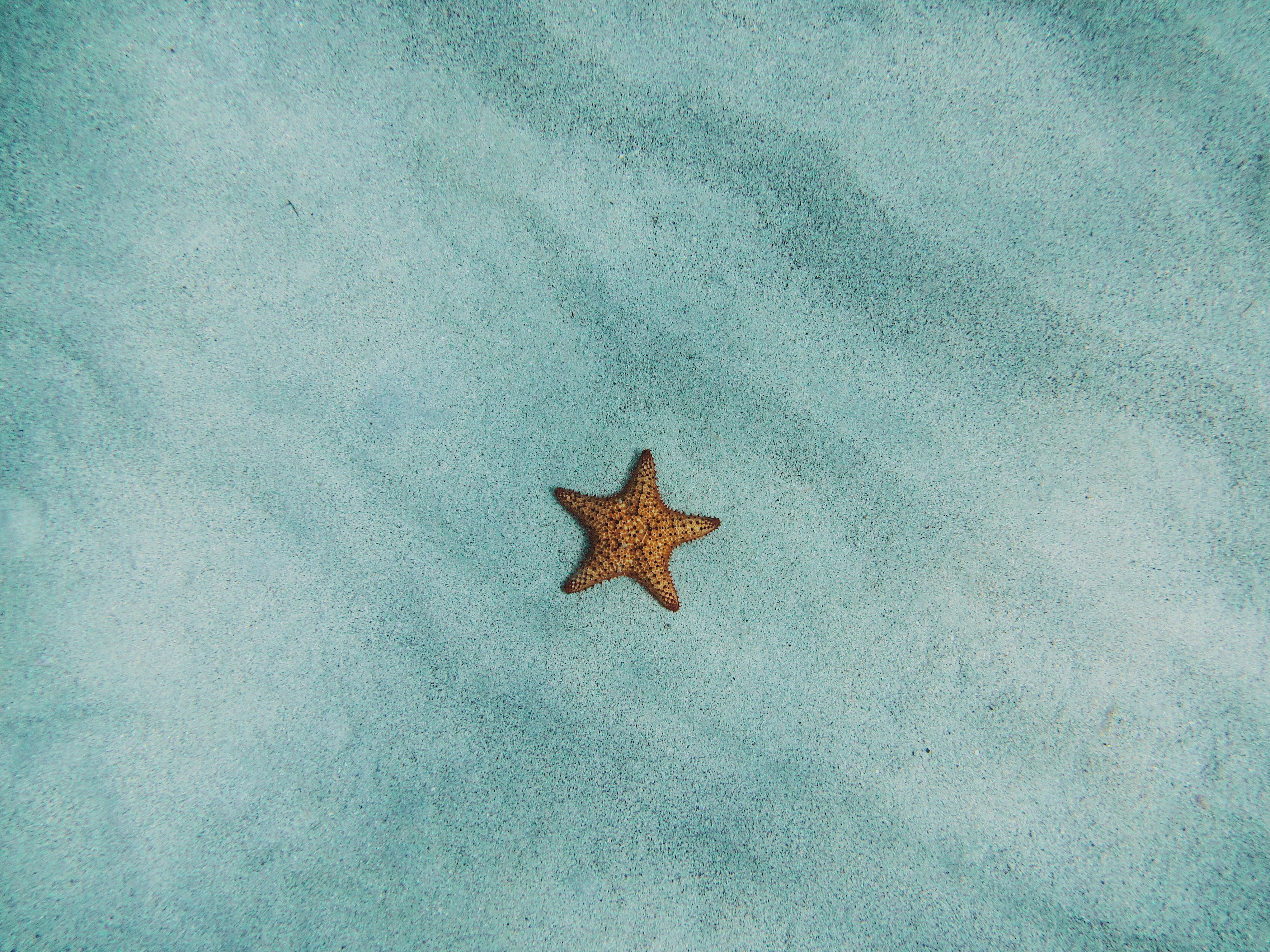 156140 download wallpaper Minimalism, Starfish, Sand, Surface screensavers and pictures for free