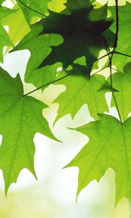 8660 скачать обои Растения, Листья - заставки и картинки бесплатно