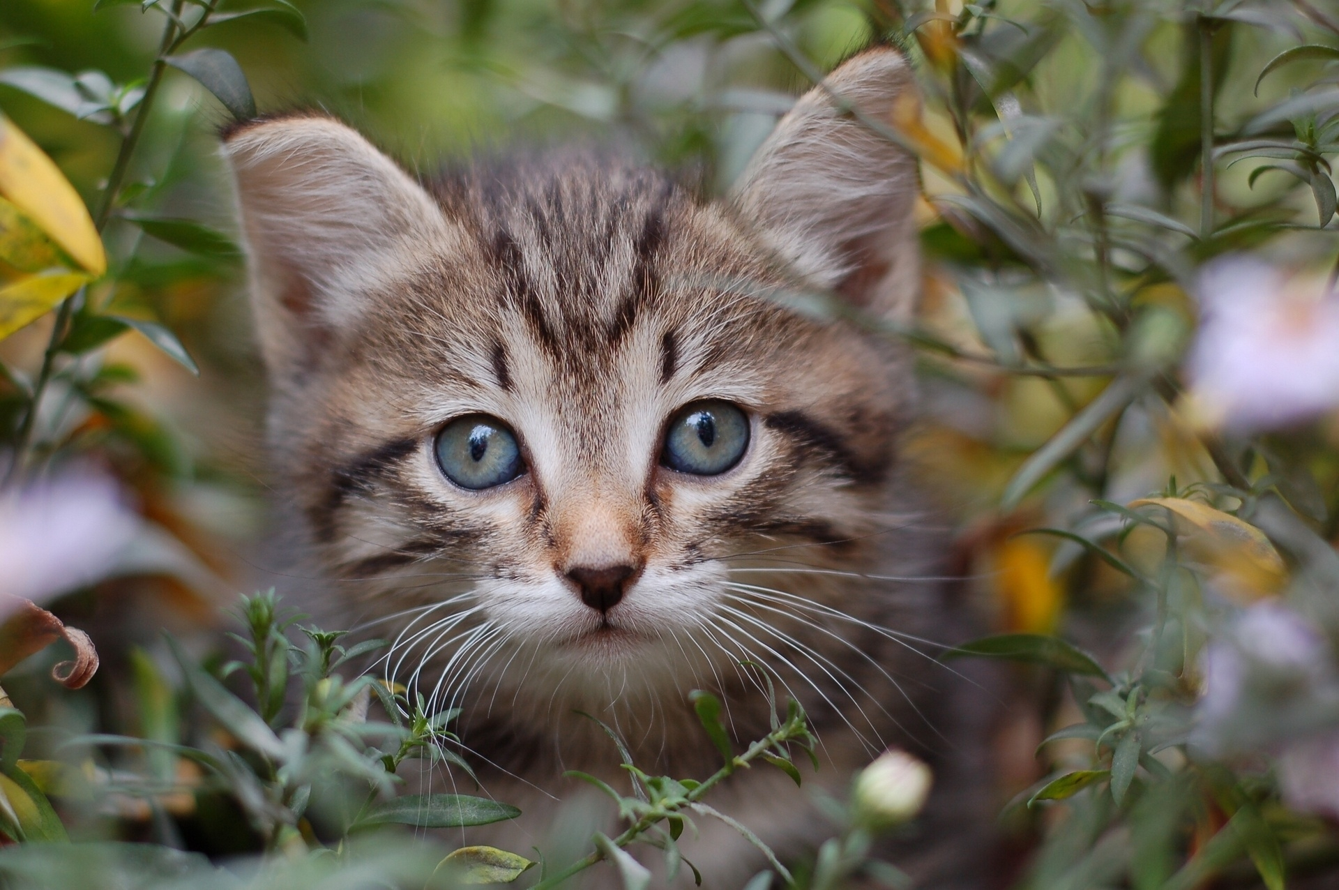 156175 download wallpaper Animals, Cat, Grass, Leaves, Peek Out, Look Out, Kitty, Kitten screensavers and pictures for free