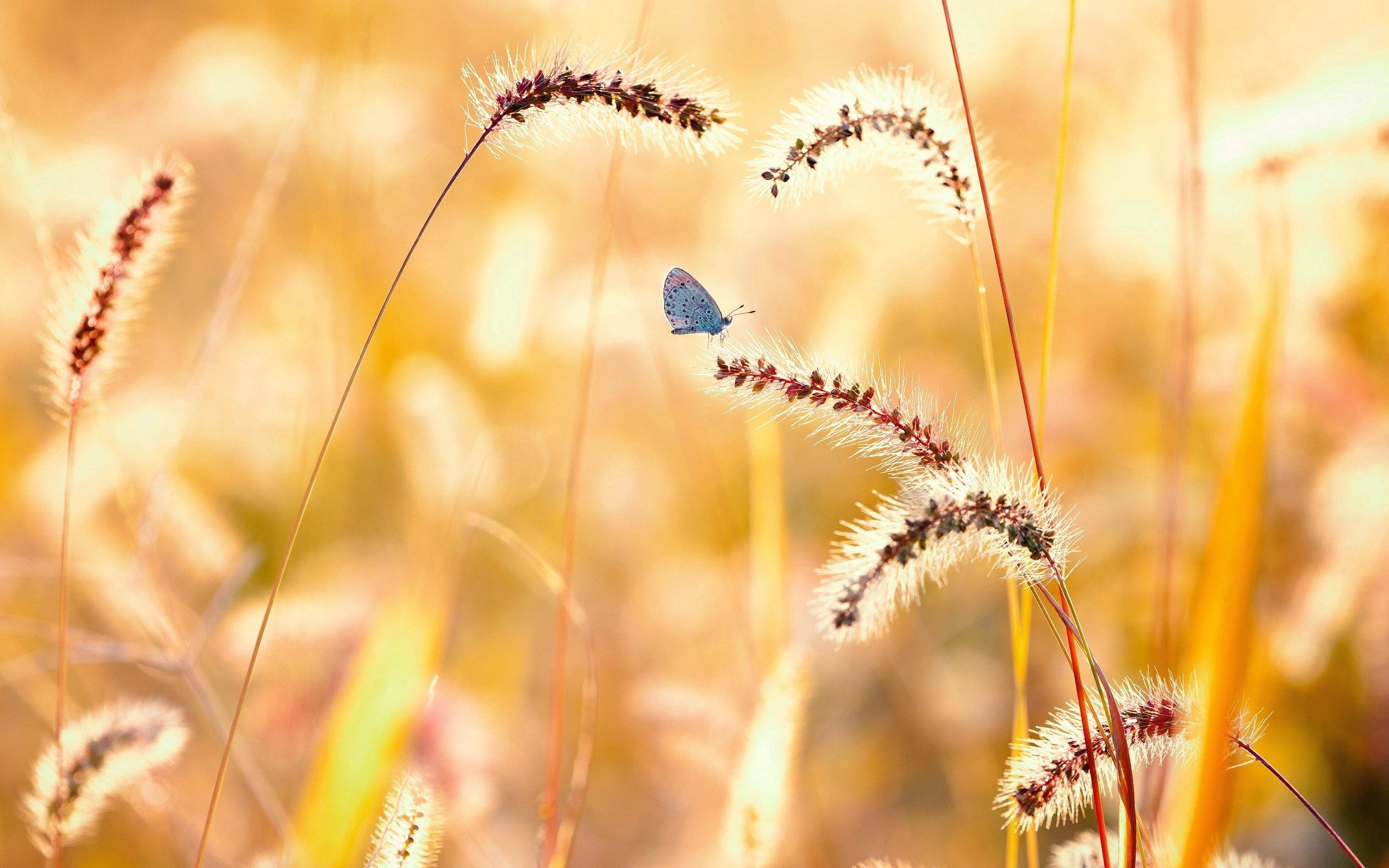 130734 Screensavers and Wallpapers Butterfly for phone. Download Flowers, Grass, Macro, Butterfly pictures for free