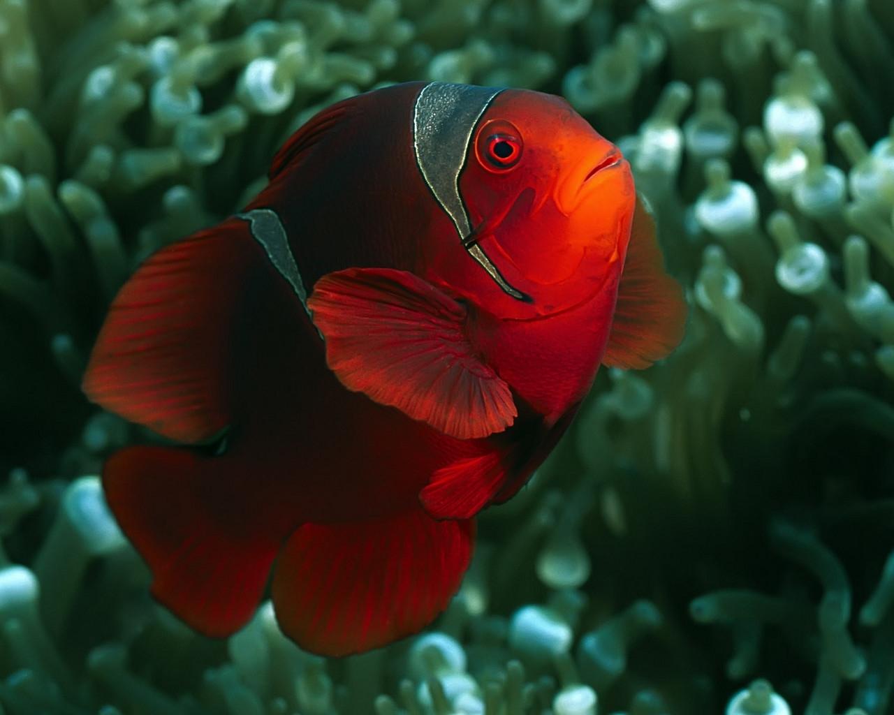 8928 Заставки и Обои Рыбы на телефон. Скачать Рыбы, Животные, Рыбы-Клоуны картинки бесплатно