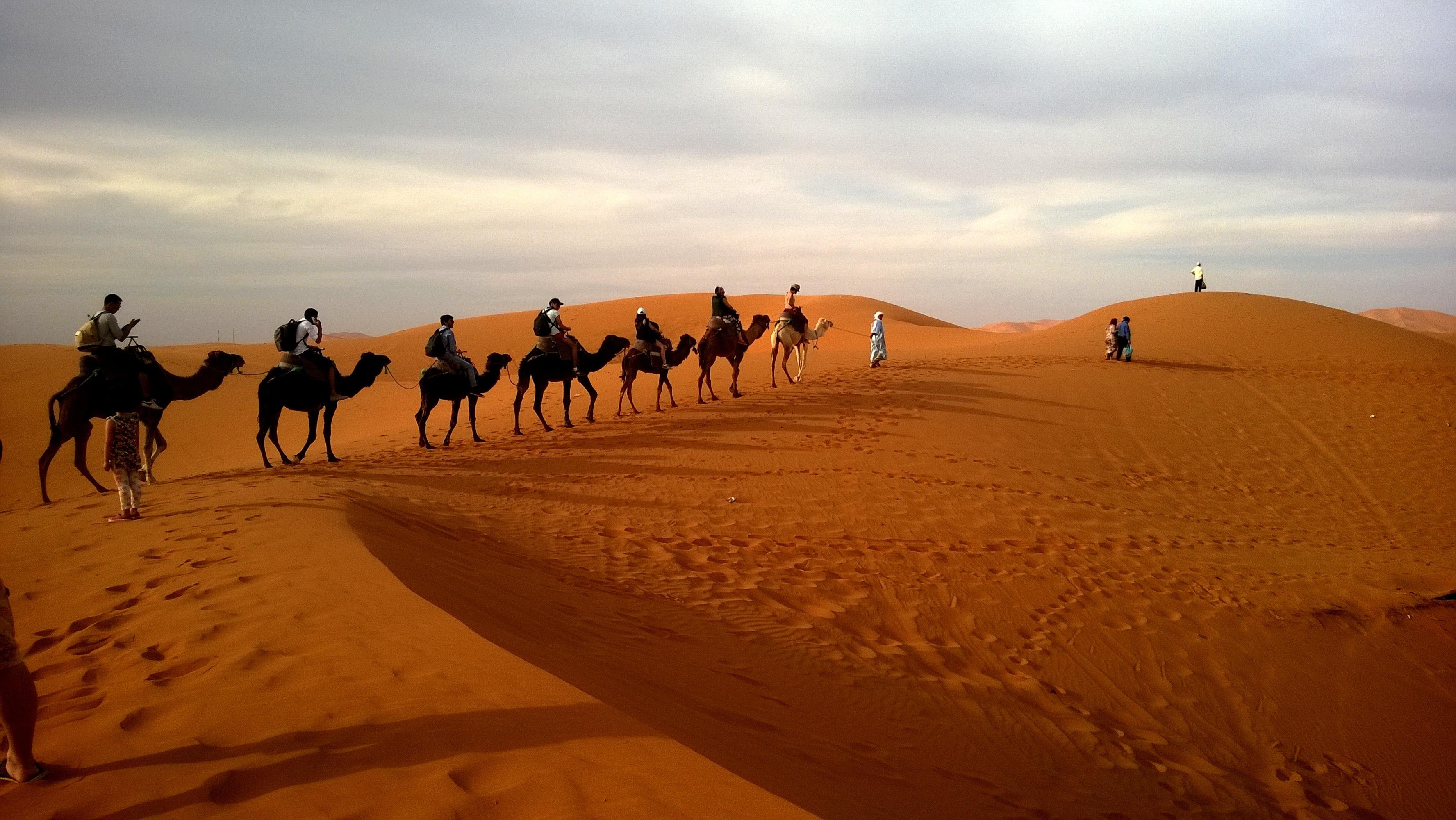 130588 download wallpaper Animals, Caravan, Safari, Dune, Desert, Camels screensavers and pictures for free