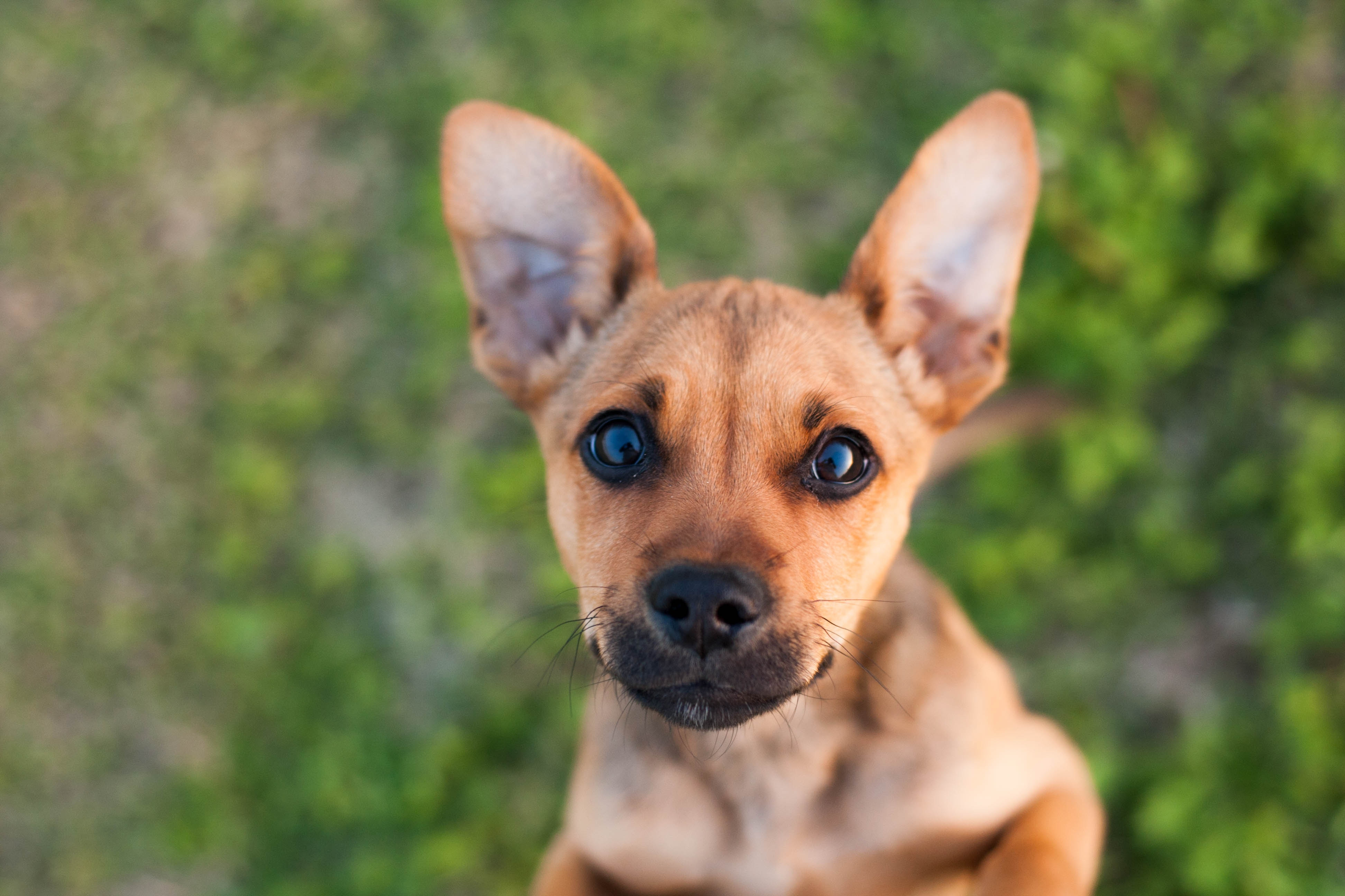 64713 download wallpaper Animals, Puppy, Dog, Muzzle screensavers and pictures for free
