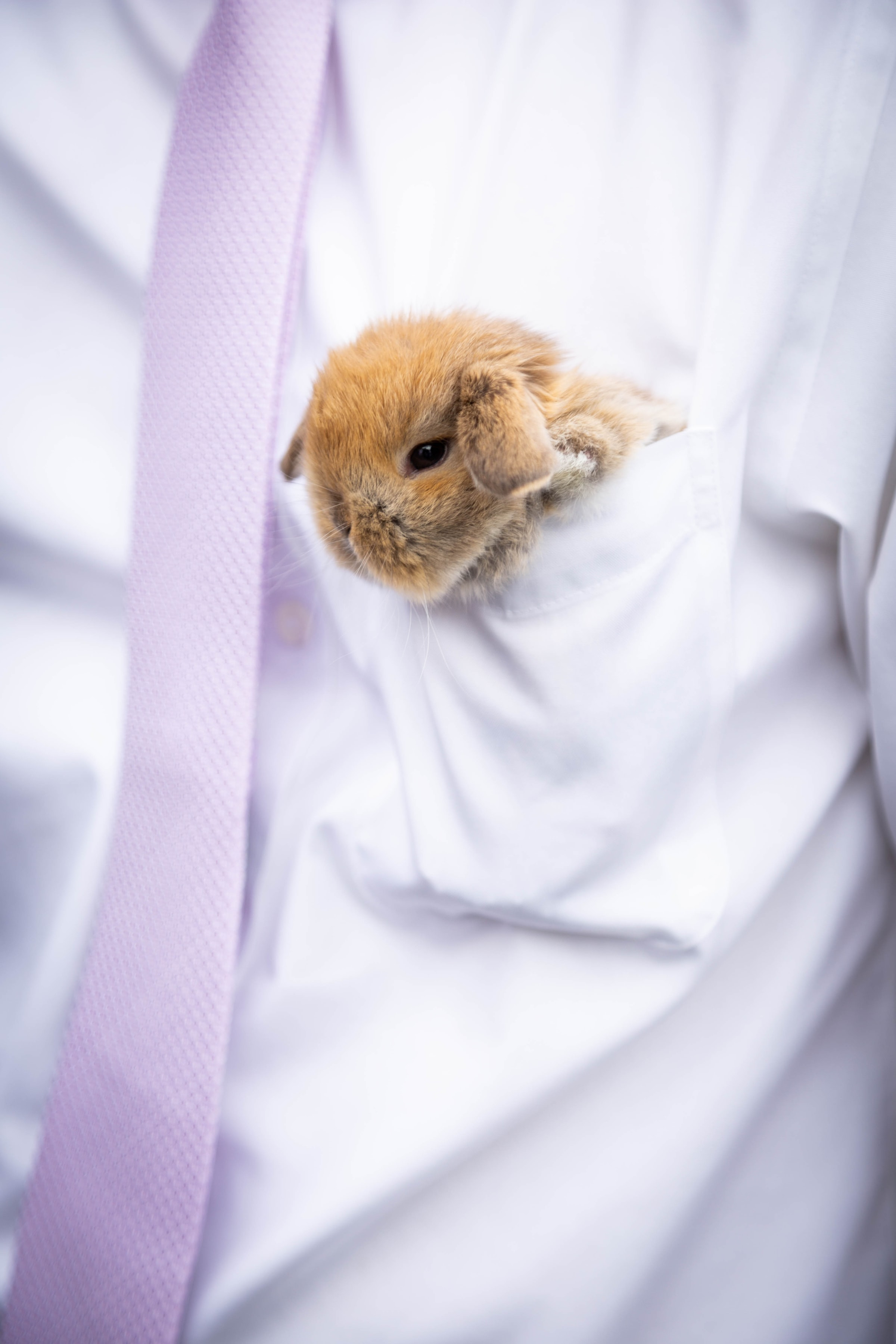 104655 download wallpaper Animals, Rabbit, Hare, Nice, Sweetheart, Fluffy screensavers and pictures for free