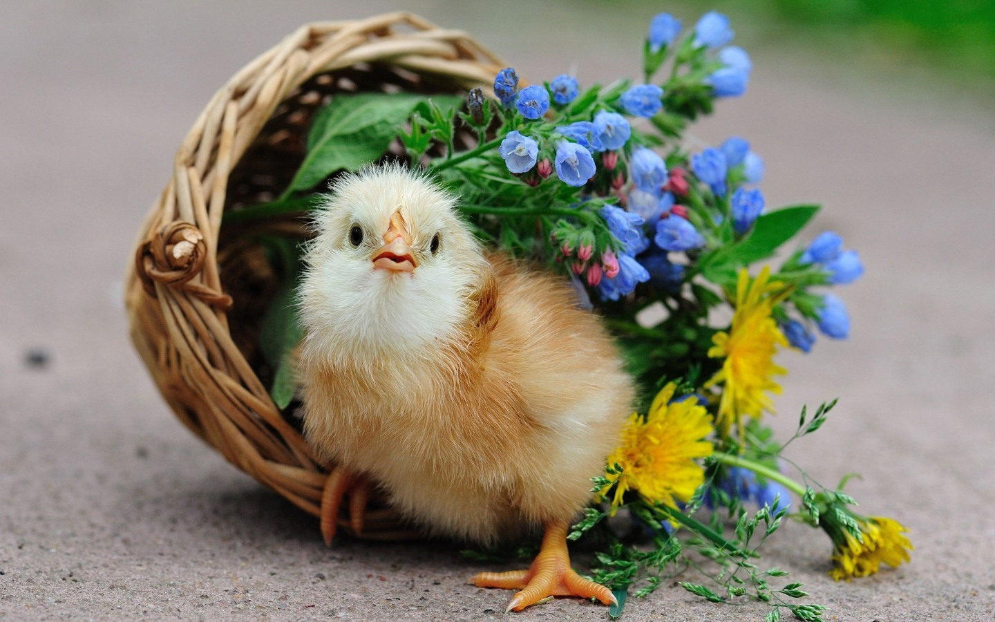 21095 download wallpaper Animals, Birds screensavers and pictures for free