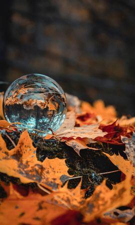 112329壁紙のダウンロード大きい, マクロ, 玉, 球, ガラス, グラス, 秋, 葉, 木の葉, 反射-スクリーンセーバーと写真を無料で
