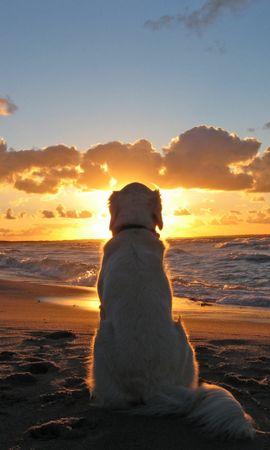 24775 скачать обои Животные, Пейзаж, Собаки, Море, Солнце, Пляж - заставки и картинки бесплатно