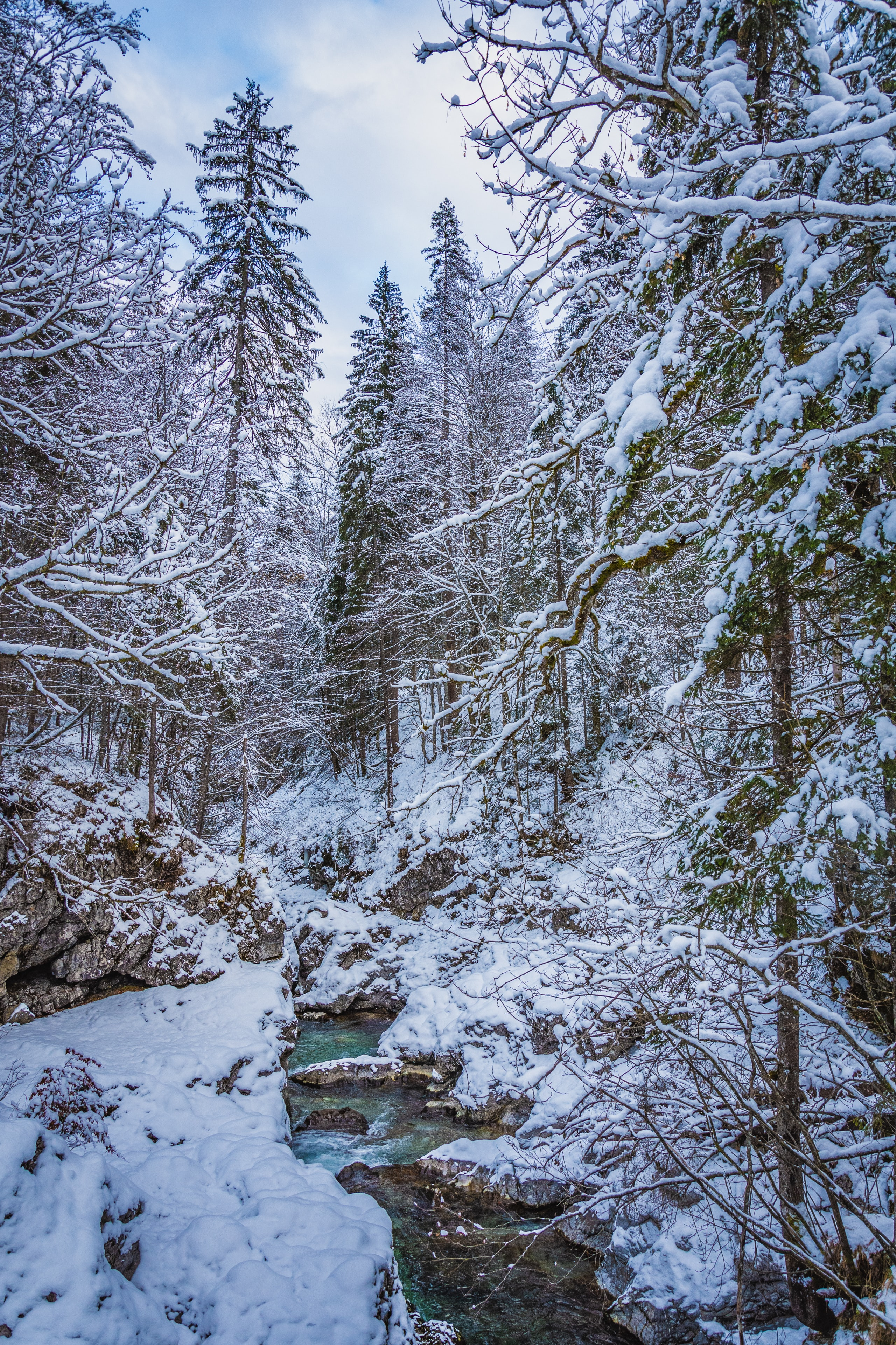150596 download wallpaper Nature, Forest, Creek, Brook, Trees, Snow, Winter screensavers and pictures for free