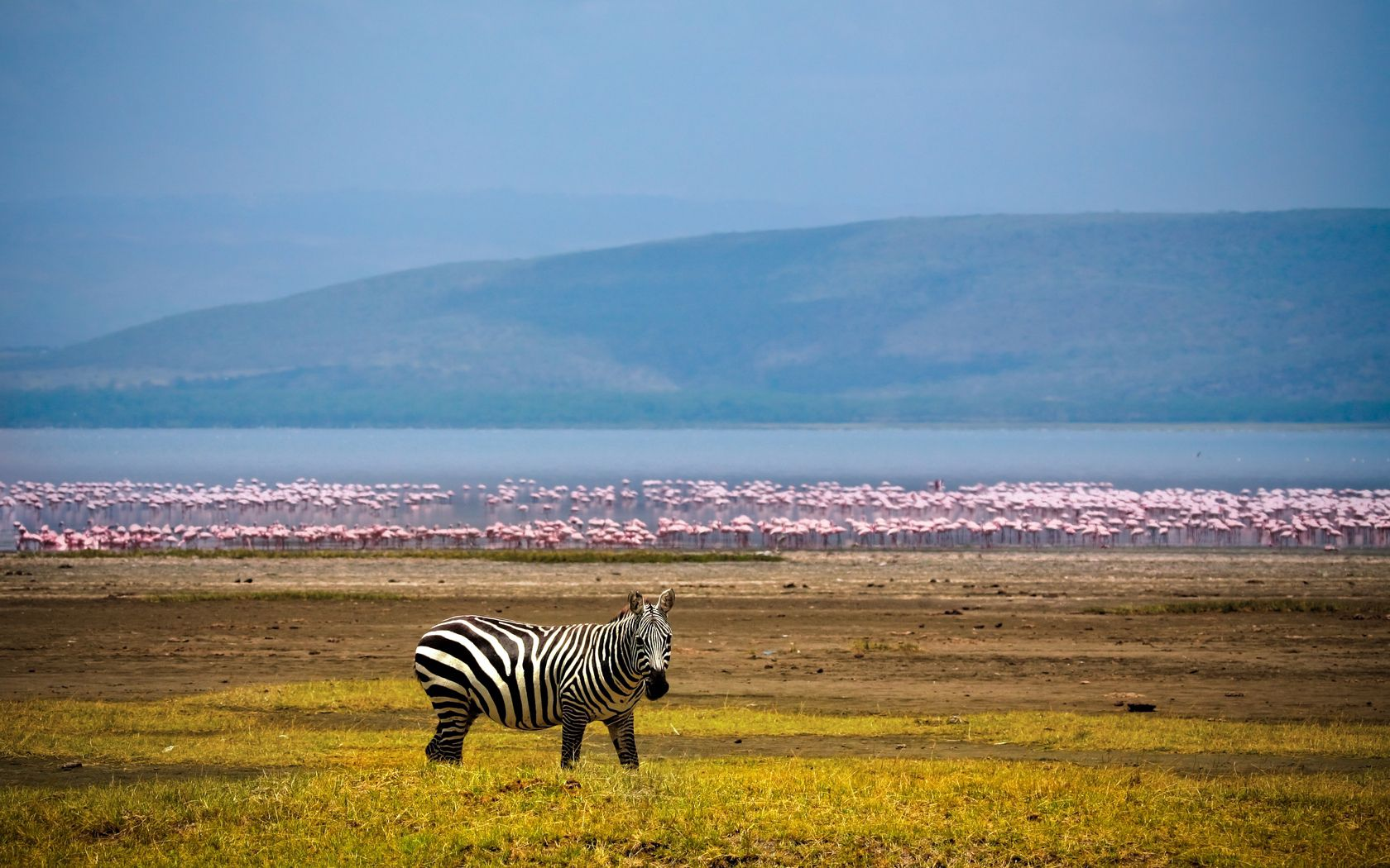 92804 download wallpaper Animals, Zebra, Africa, Background, Lake, Flamingo screensavers and pictures for free