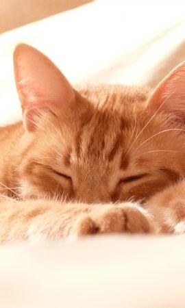64568壁紙のダウンロード動物, ネコ, 猫, 銃口, 足, 睡眠, 夢-スクリーンセーバーと写真を無料で