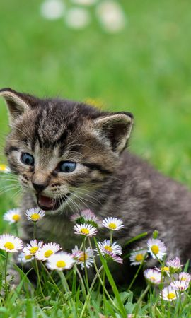 121535 Screensavers and Wallpapers Funny for phone. Download Animals, Kitty, Kitten, Funny, Nice, Sweetheart, Surprise, Astonishment, Stroll, Flowers pictures for free