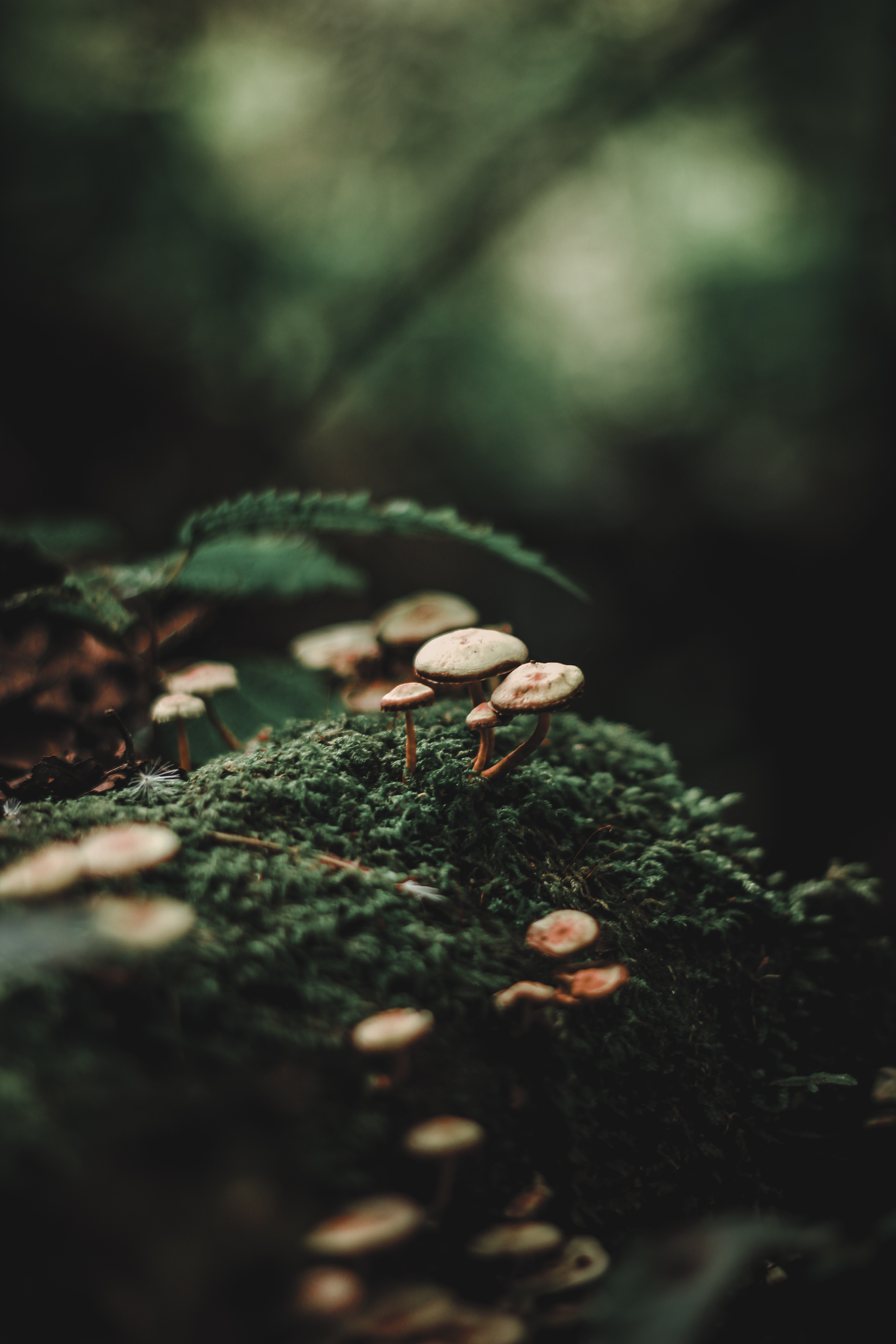 95865 download wallpaper Mashrooms, Macro, Blur, Smooth, Moss screensavers and pictures for free